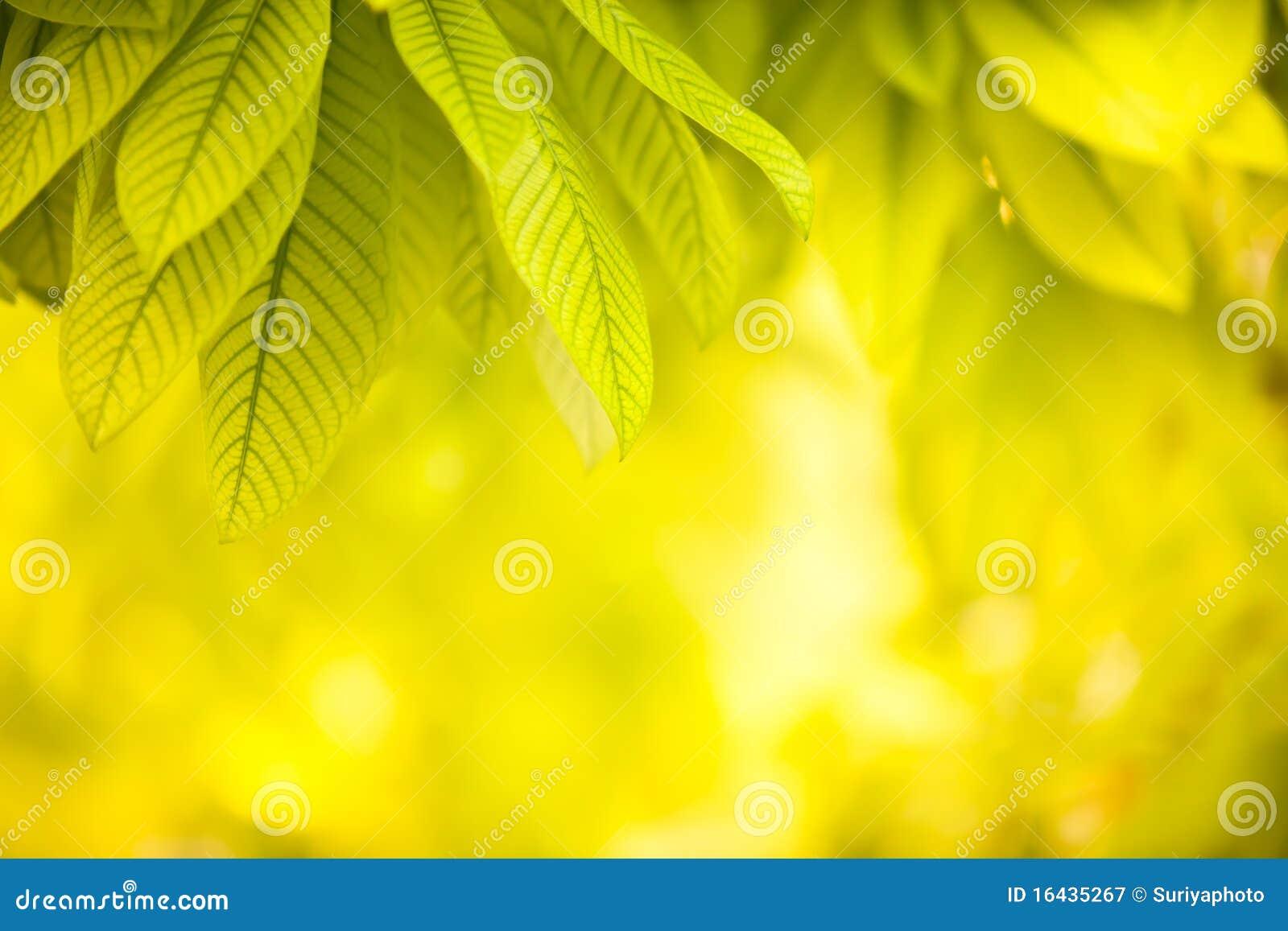 Hojas del verde en fondo amarillo