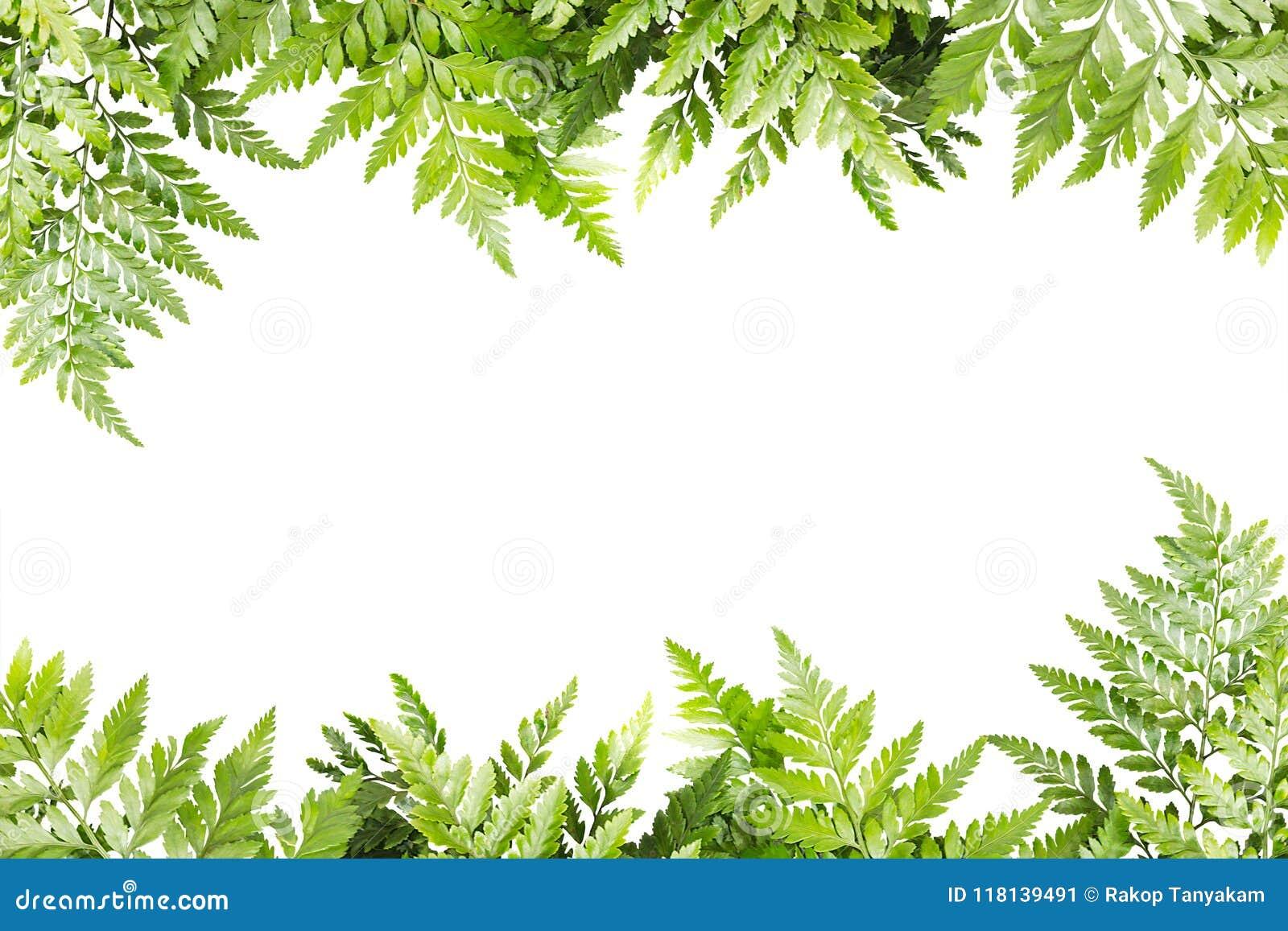 Hojas Del Verde Para El Marco En El Fondo Blanco Frontera De La Naturaleza Imagen De Archivo Imagen De Planta Macro 118139491