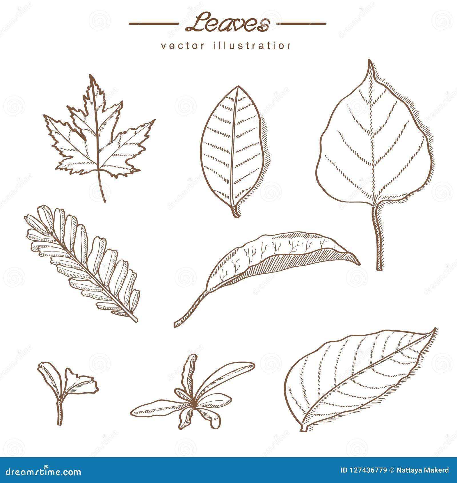 Hojas Dibujadas Mano De La Naturaleza - Estilo Del Vintage ...