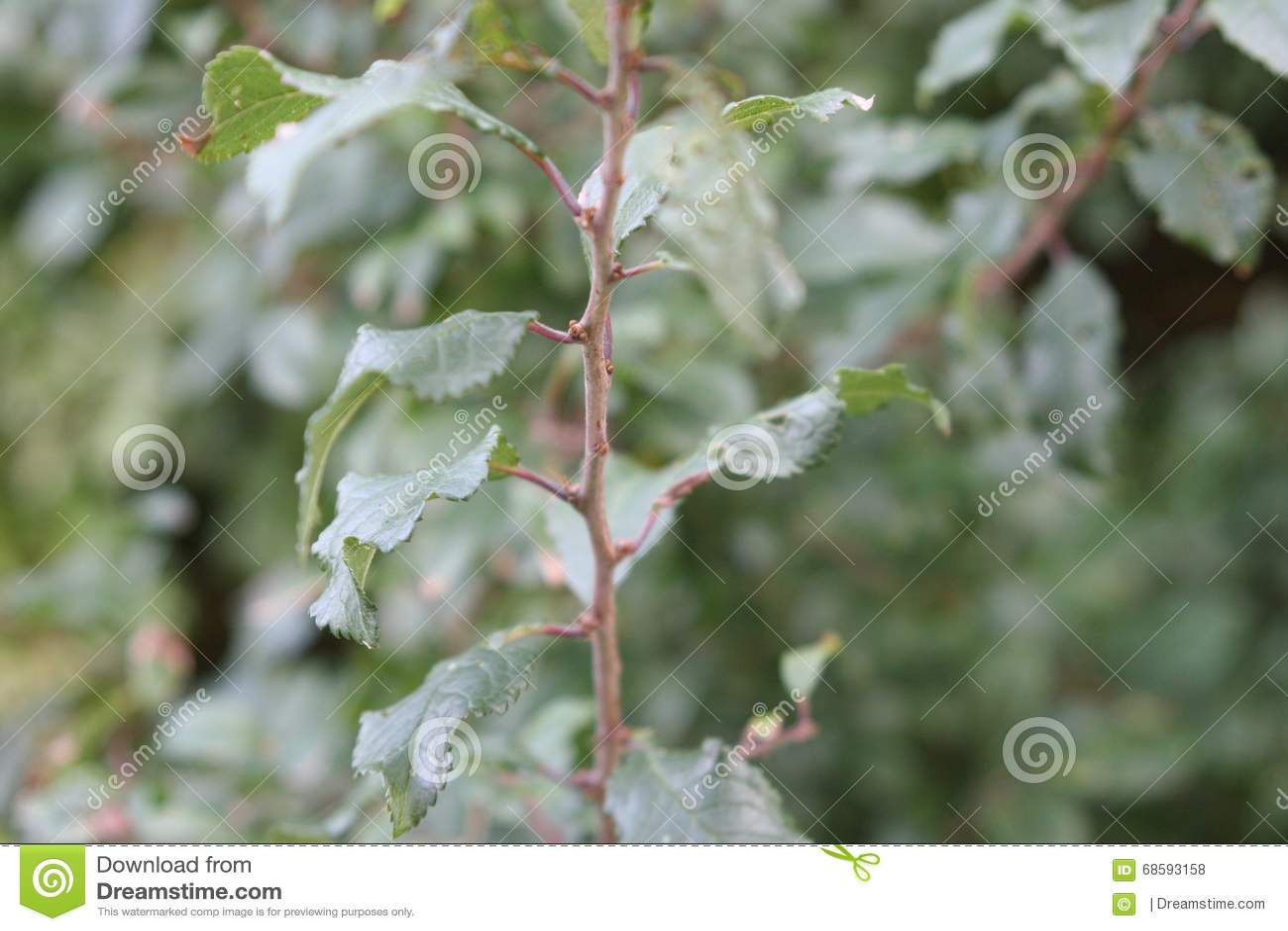 Hojas en una rama de una planta