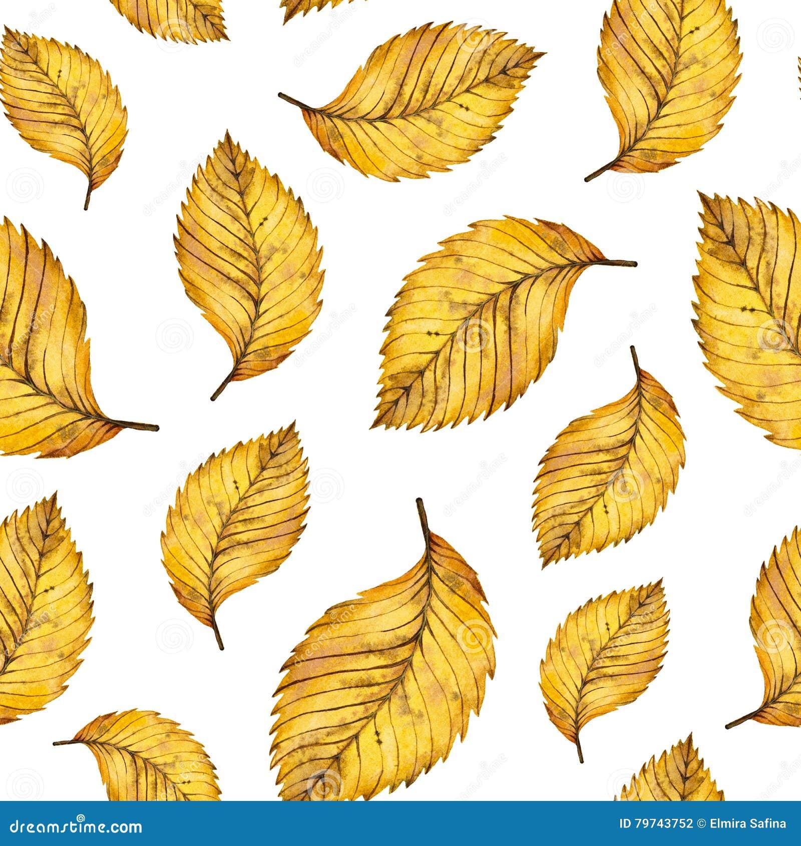 Hojas inconsútiles del amarillo del otoño del modelo de la acuarela del olmo