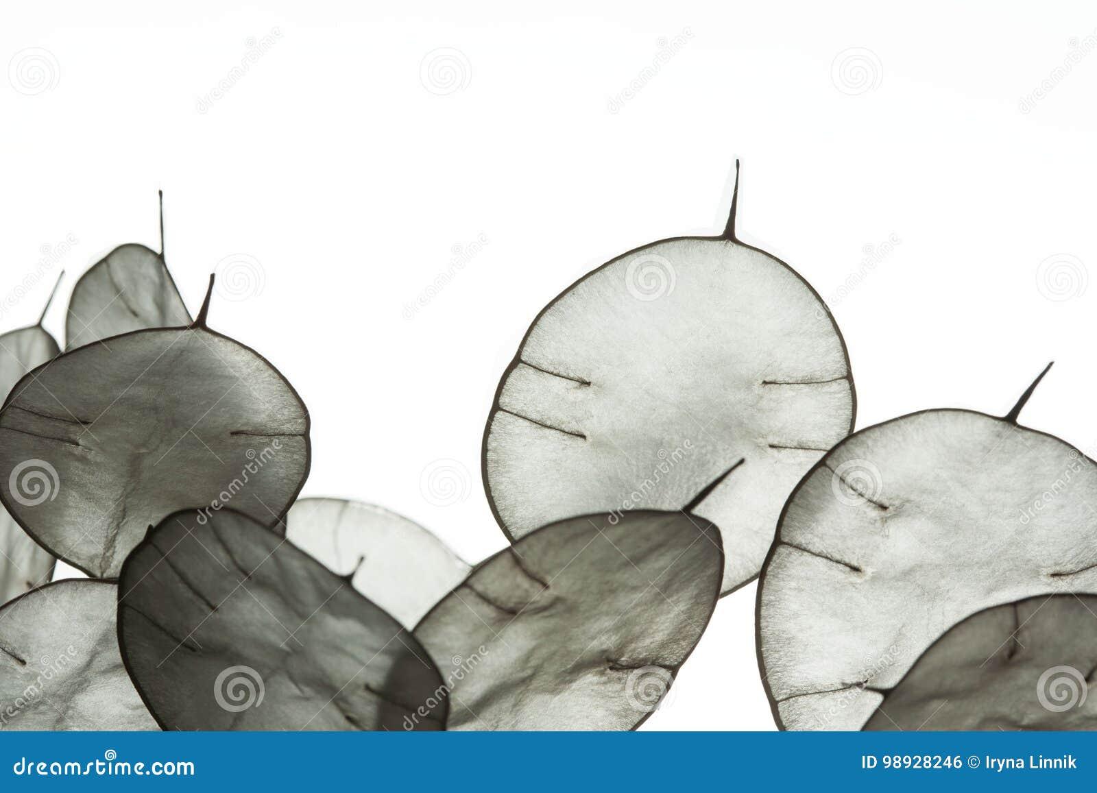 Hojas inusuales con una extremidad en contraluz Textura de las hojas aisladas en el fondo blanco Estilo de Eco, materiales natura
