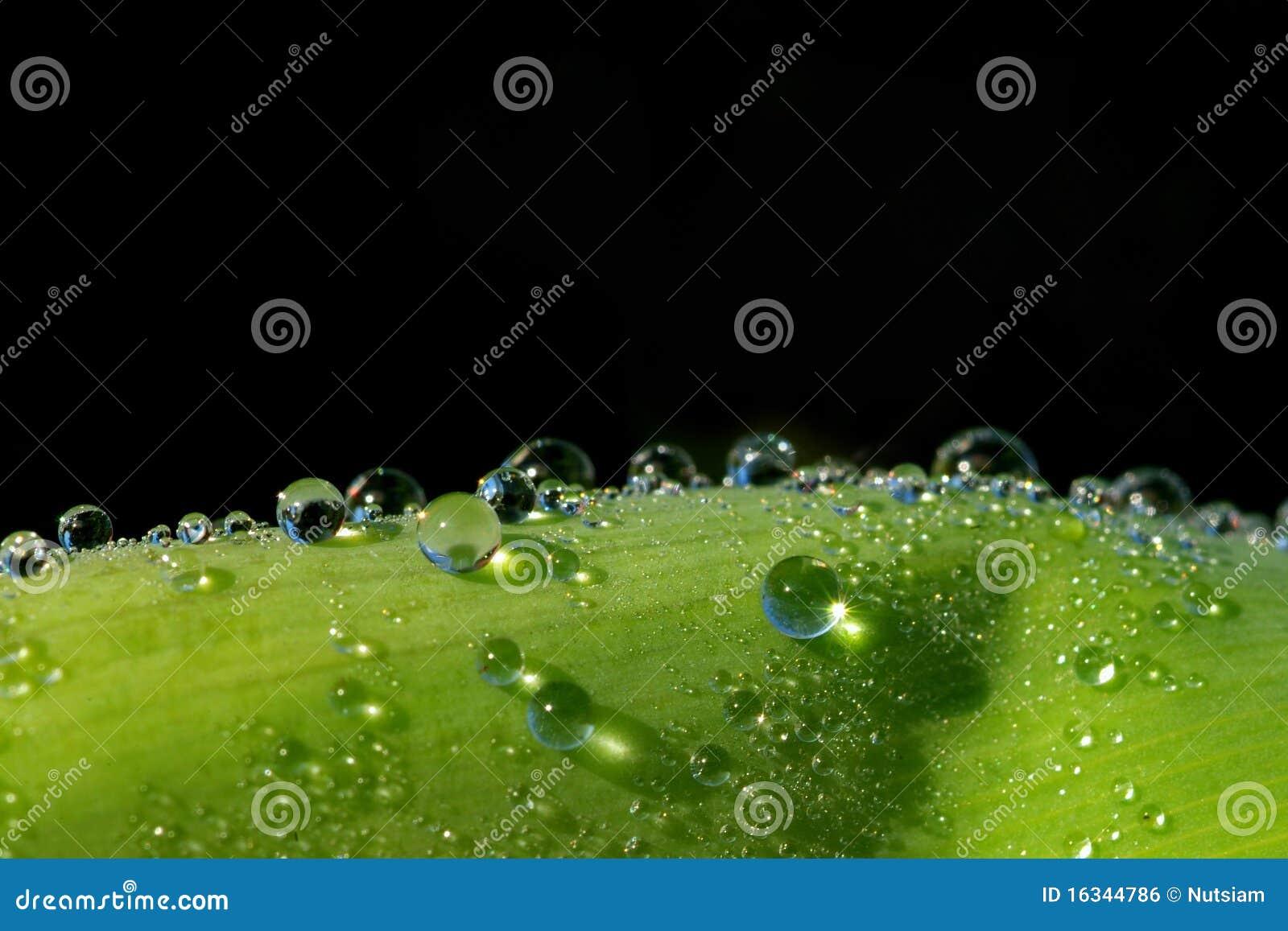 Hojas verdes claras en la luz del sol
