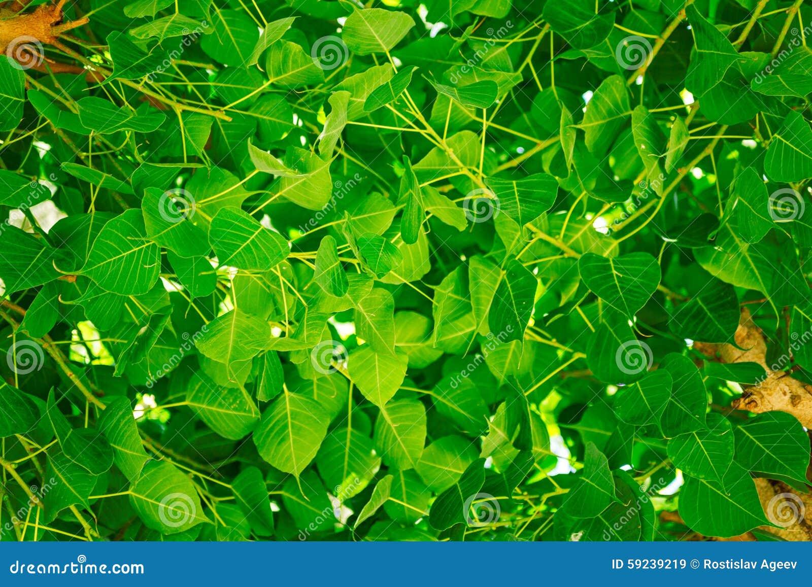 Download Hojas Y árbol Frescos Del Verde Imagen de archivo - Imagen de macro, ramificaciones: 59239219