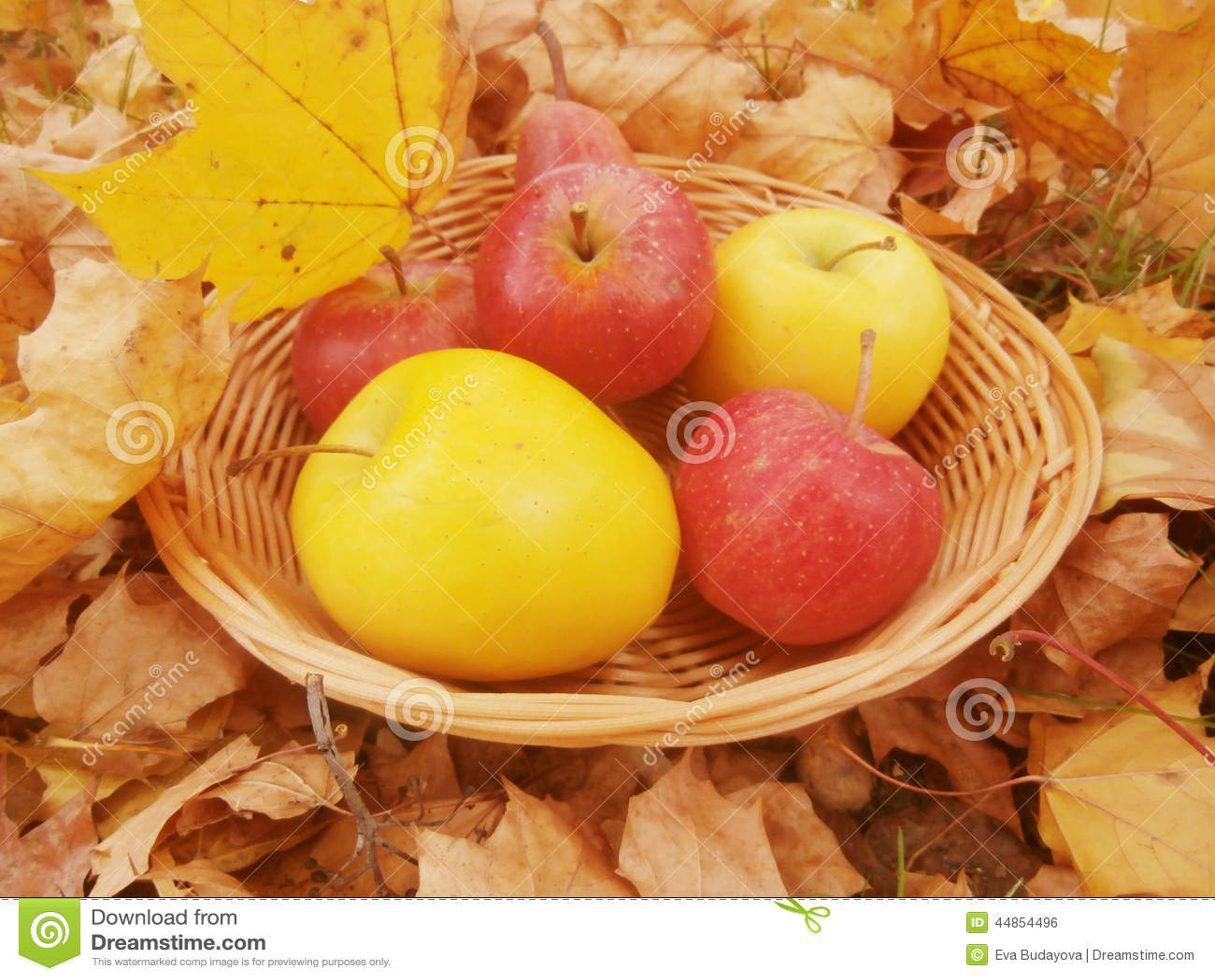 Hojas y manzanas de otoño