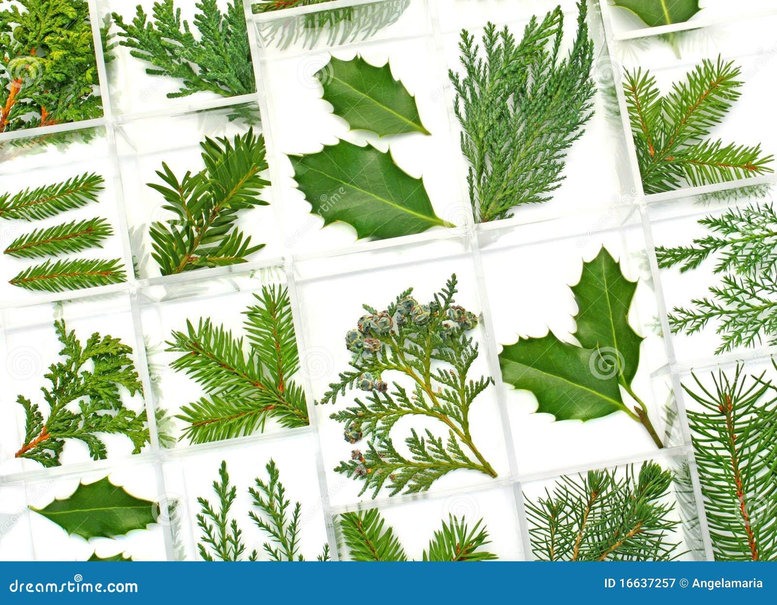 Hojas y plantas del verde - Plantas de hojas grandes y verdes de exterior ...