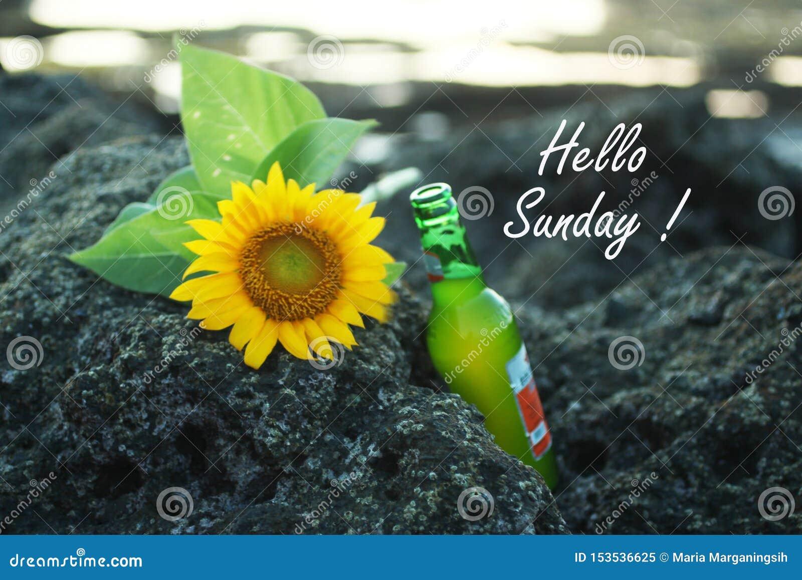 Hola saludos de las tarjetas de domingo, con la cerveza y girasoles hermosos que ponen en roca del mar en la playa Notas del text
