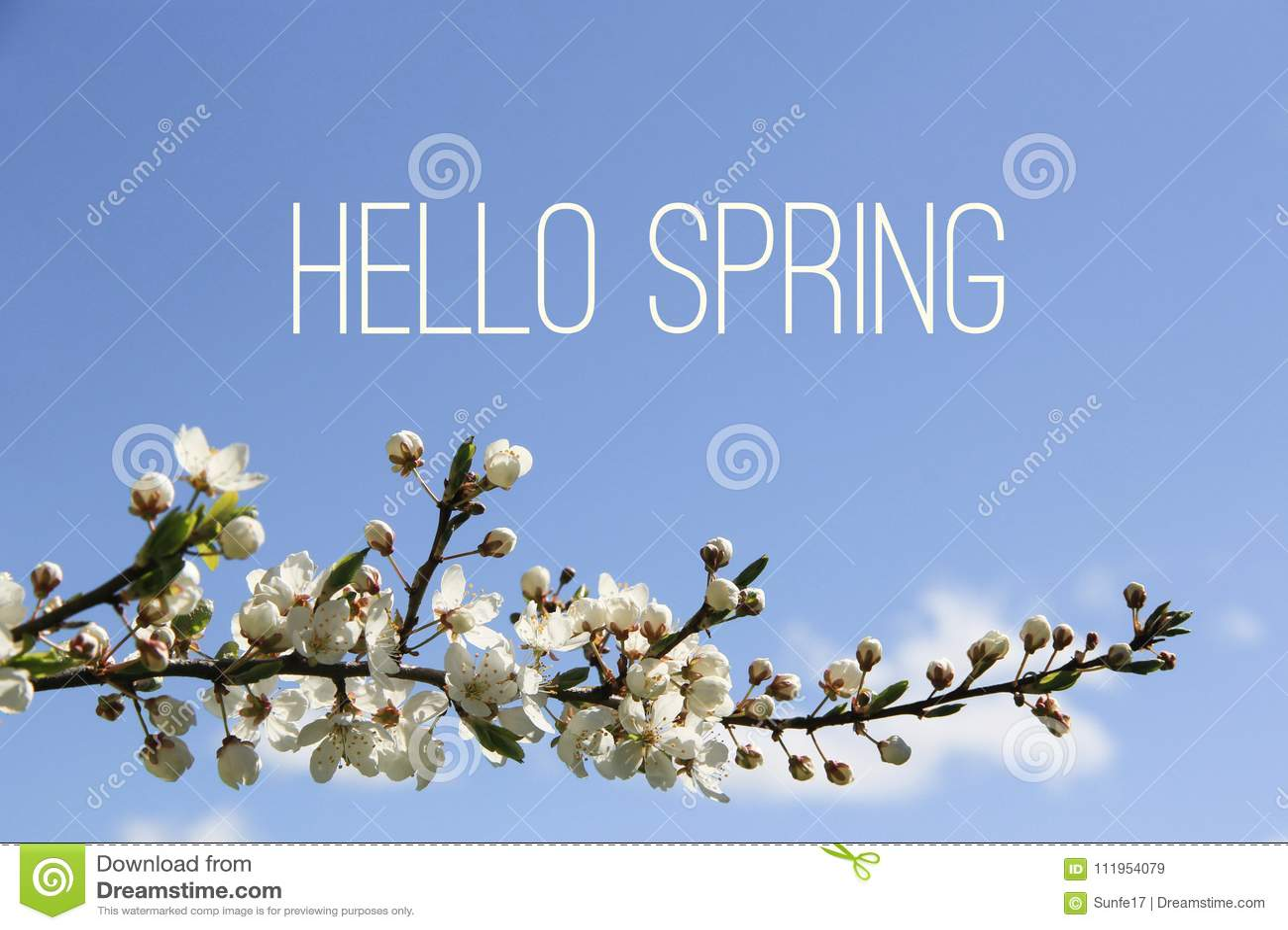 Hola texto de la primavera y rama de árbol floreciente en fondo del cielo azul