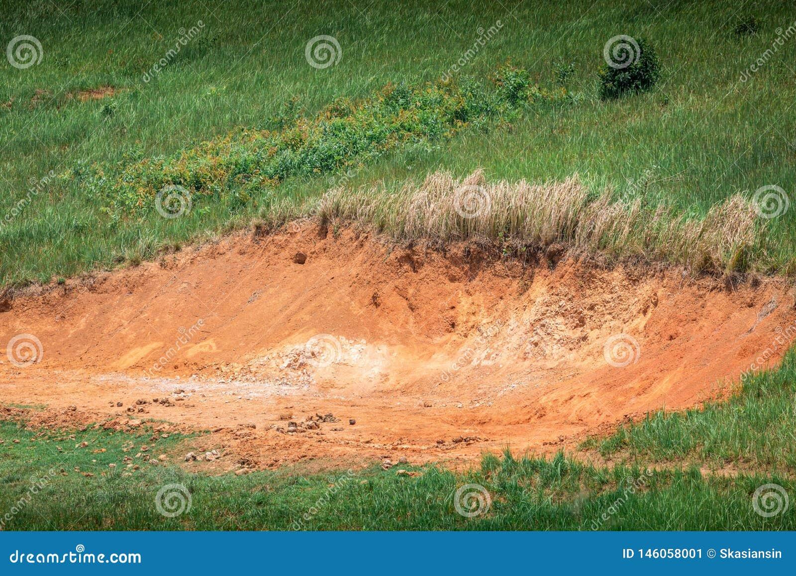 Hold of soil for wild animal