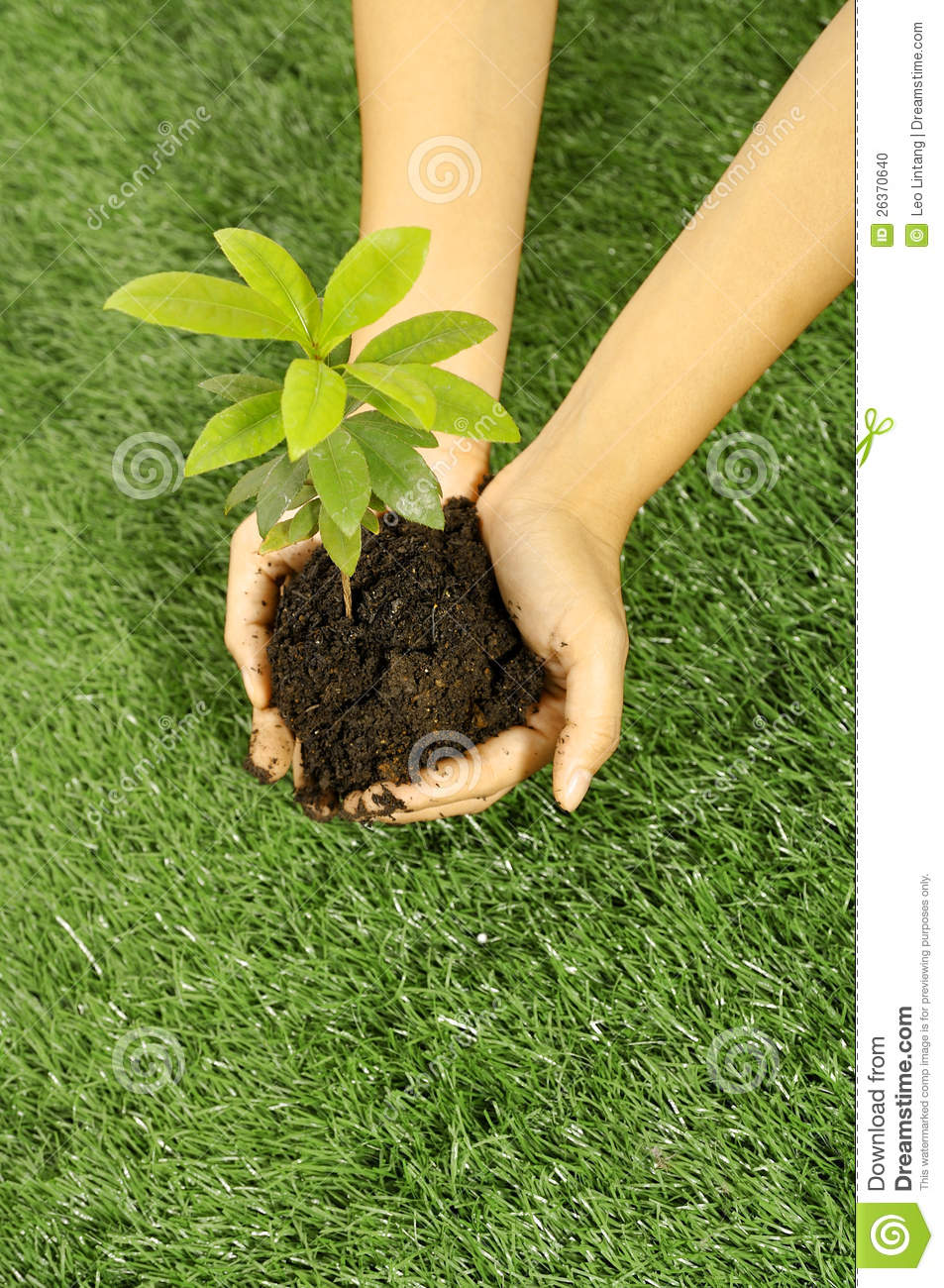 Holding Plant Seed