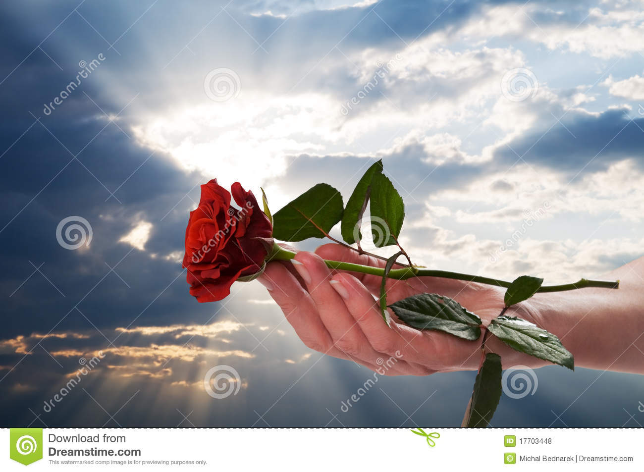 holding red rose in romantic scenery royalty free stock photos, Beautiful flower