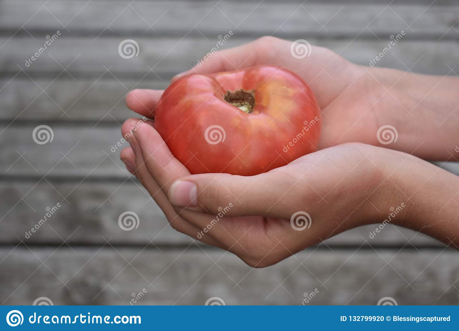 Holding a red tomato on a wood slat background