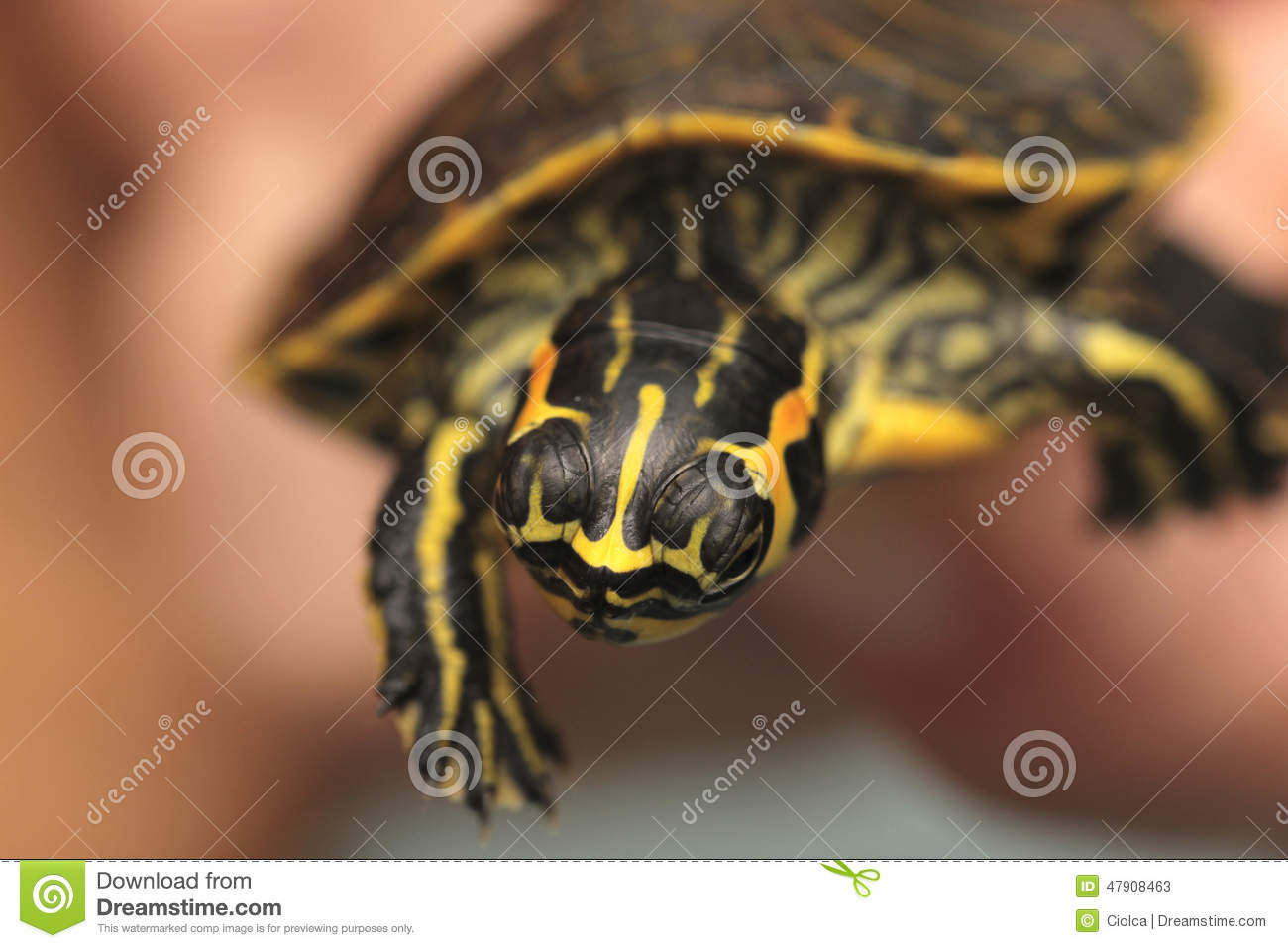 Holding a small painted turtle