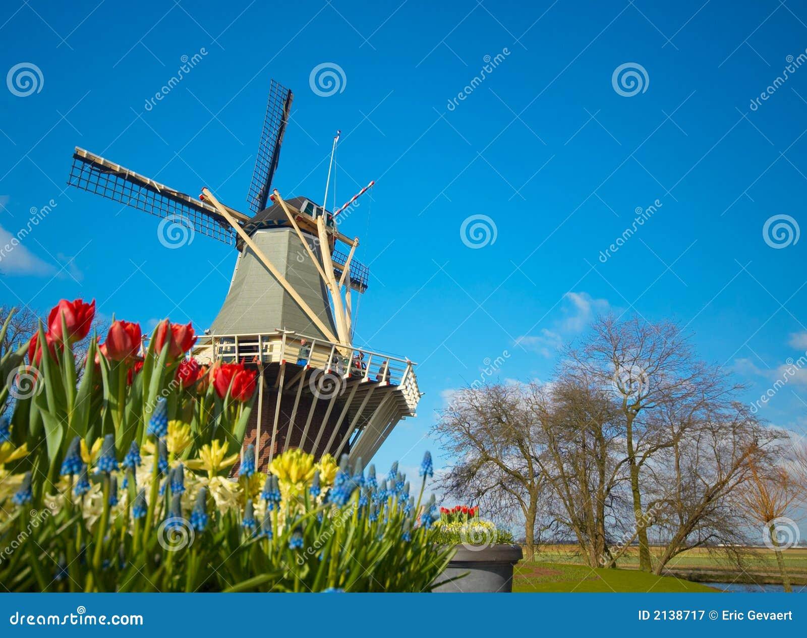 Holenderska tulipanu młyn