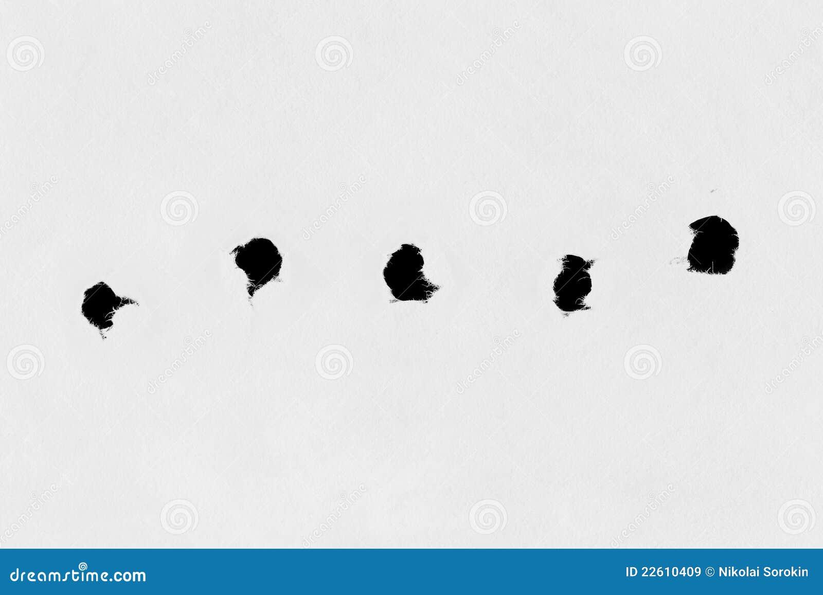 Essay on holes