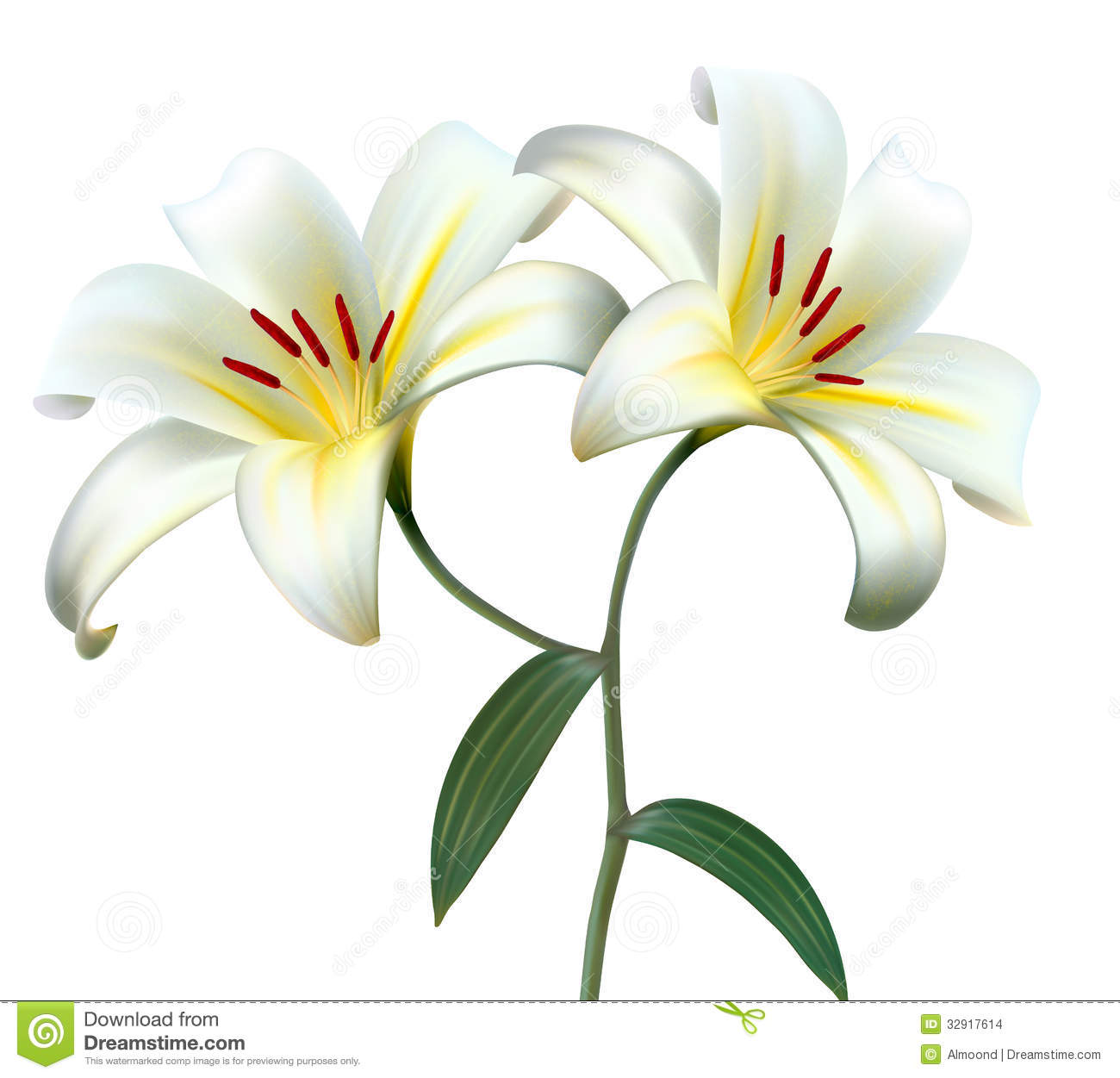 Holiday Background With Two White Lilies. Stock Vector ...