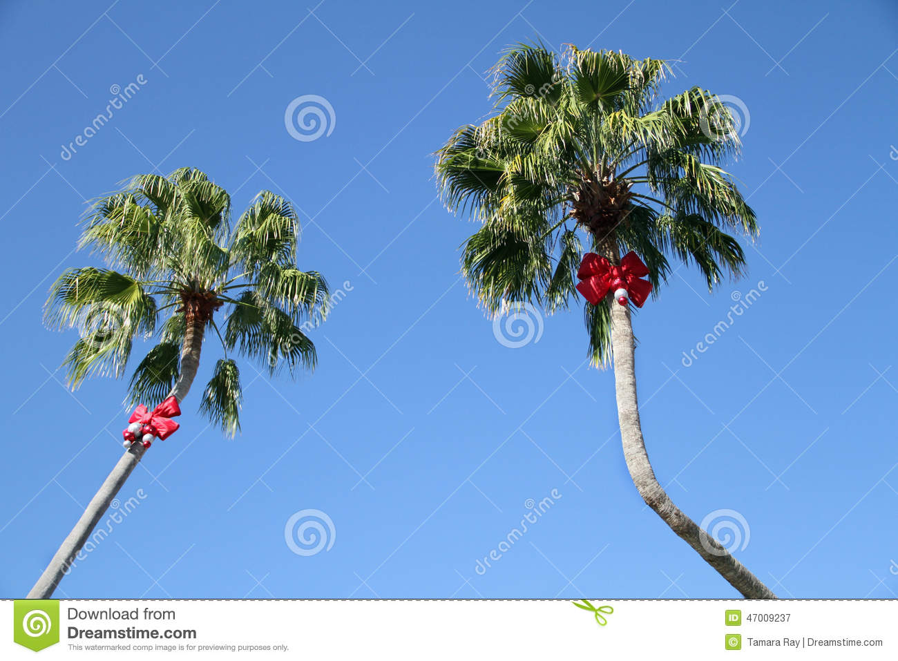 decorated palm trees with red christmas bows