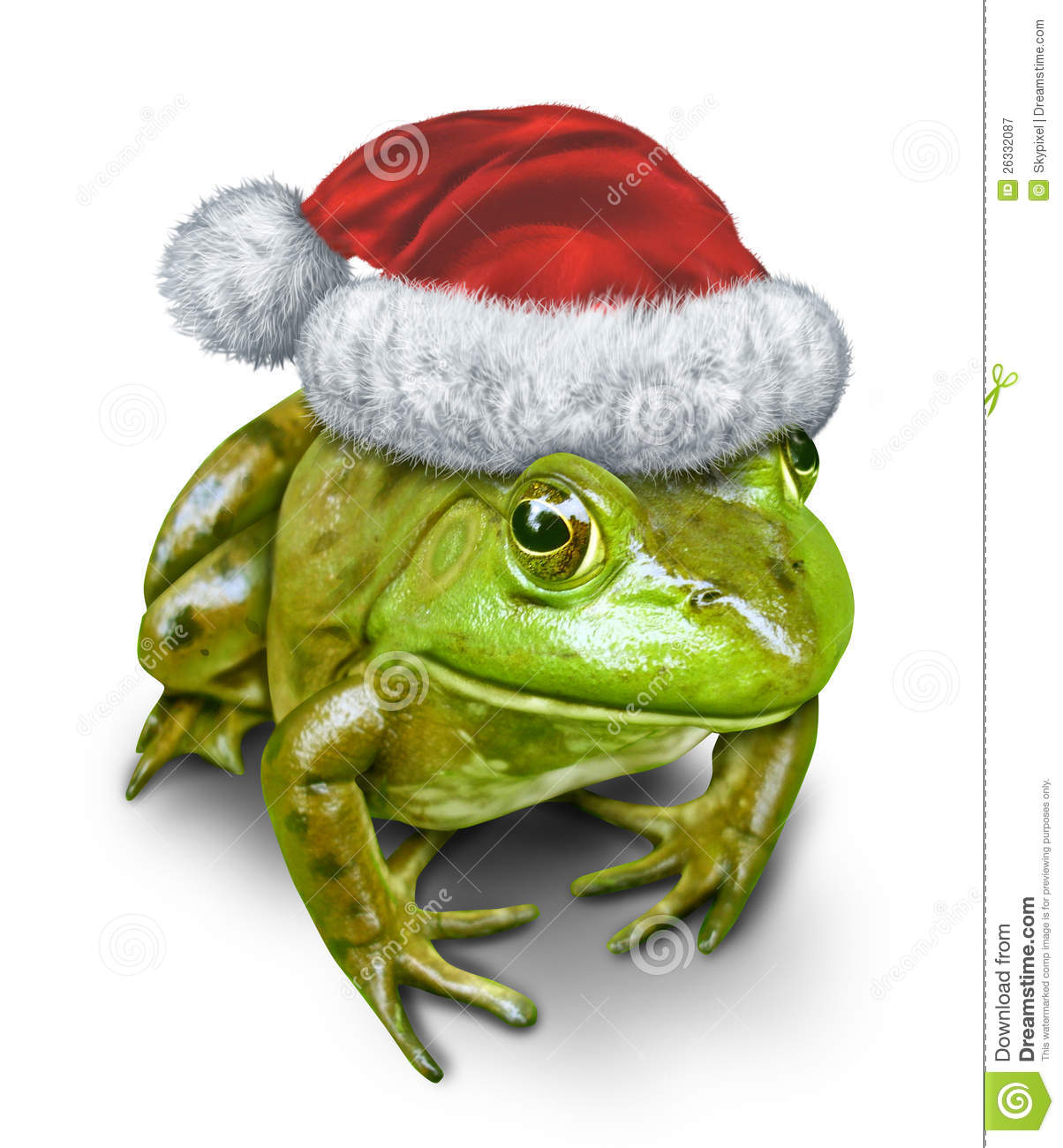 Holiday frog as a green amphibian wearing a Christmas hat as a festive ...