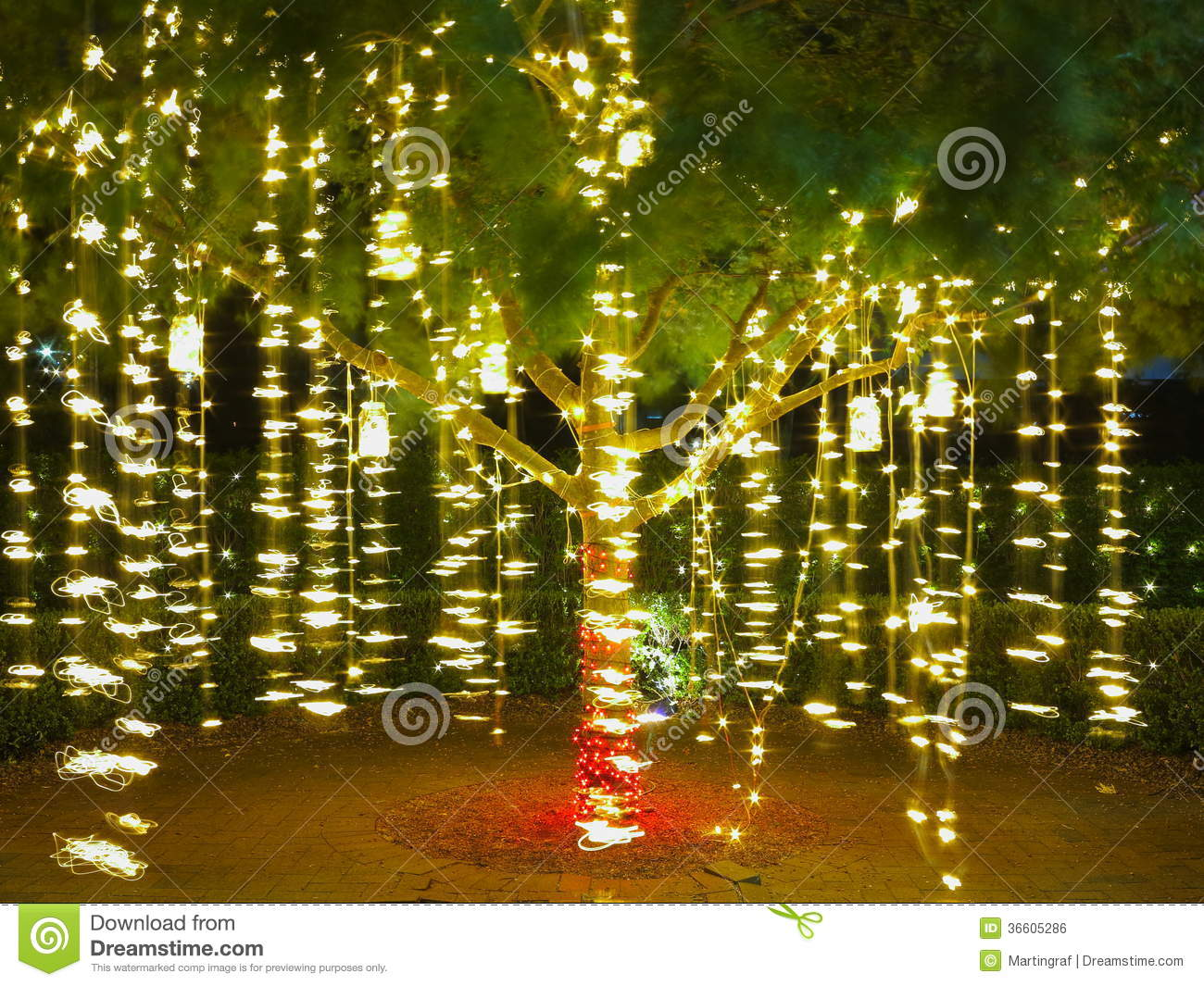 Holiday lights in tree summer night stock photo image for How to hang string lights on trees
