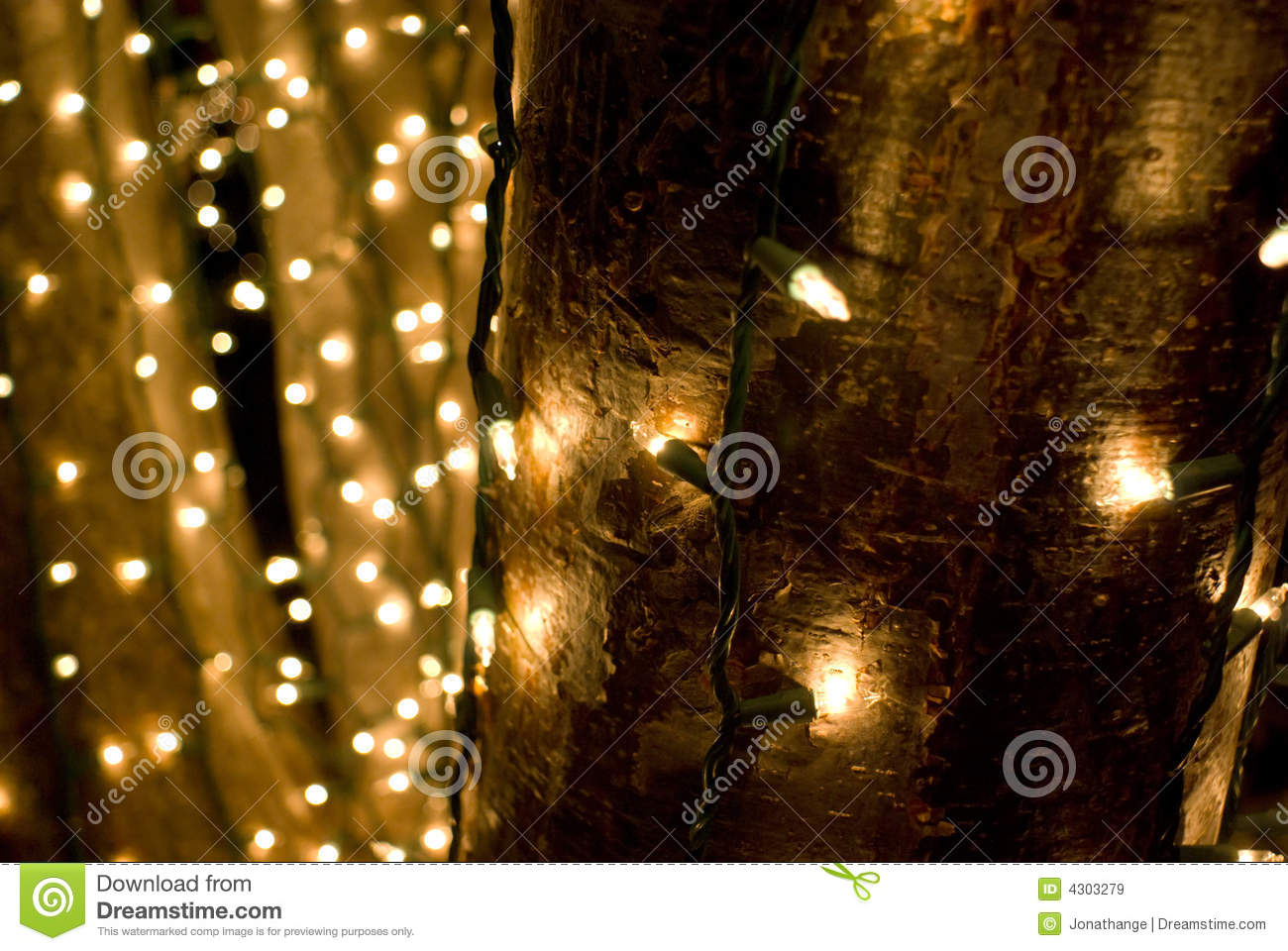 String Lights Around Tree Trunk : Holiday Lights Royalty Free Stock Images - Image: 4303279