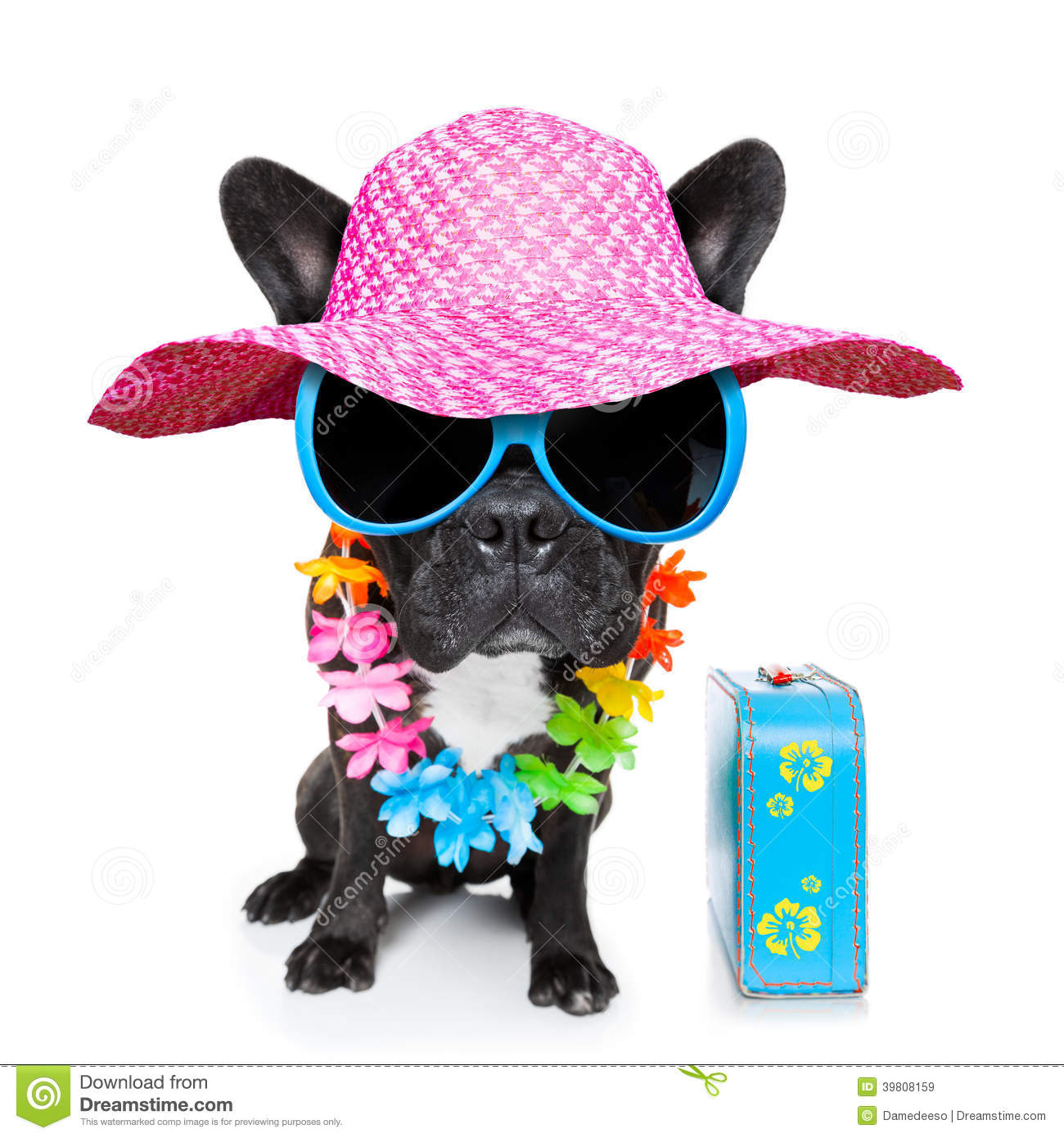 Holiday Summer Dog Stock Image Of Home Isolated