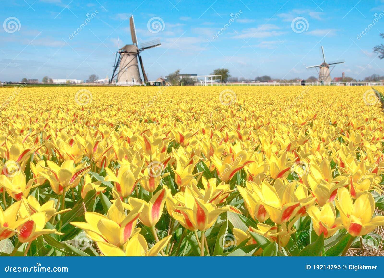Holländische Tulpe-Windmühlen-Landschaft