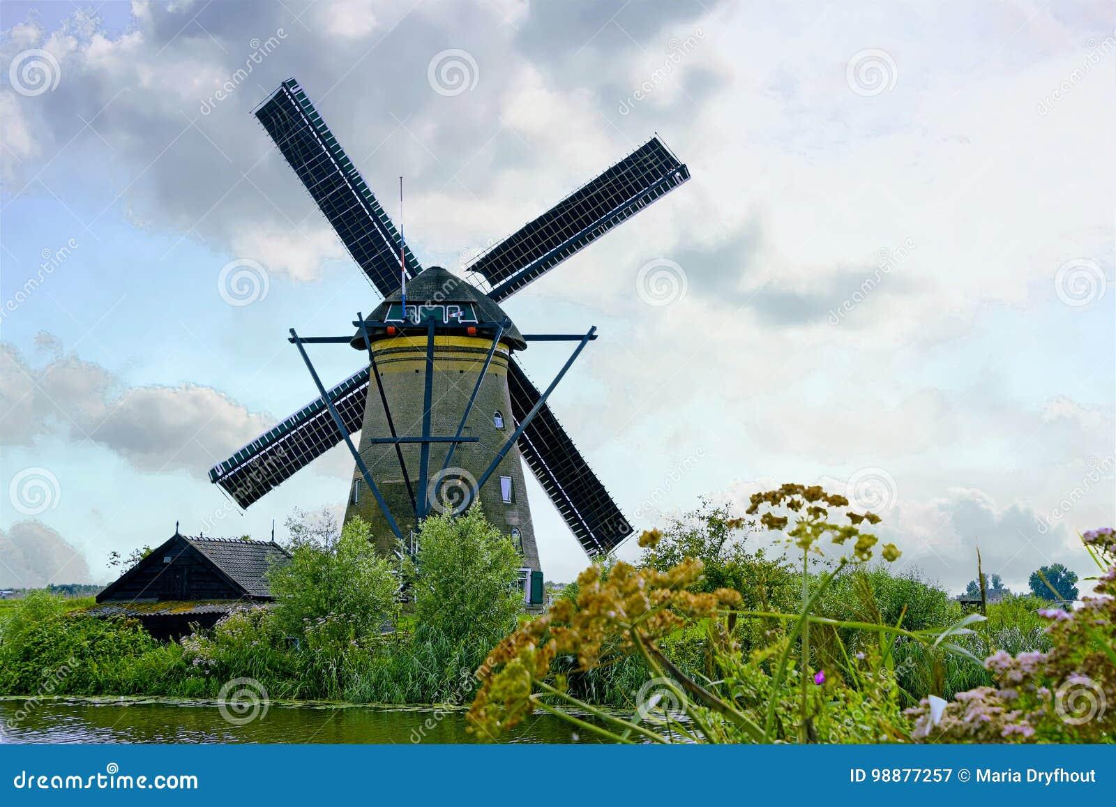 Holländsk väderkvarn med vildblommor