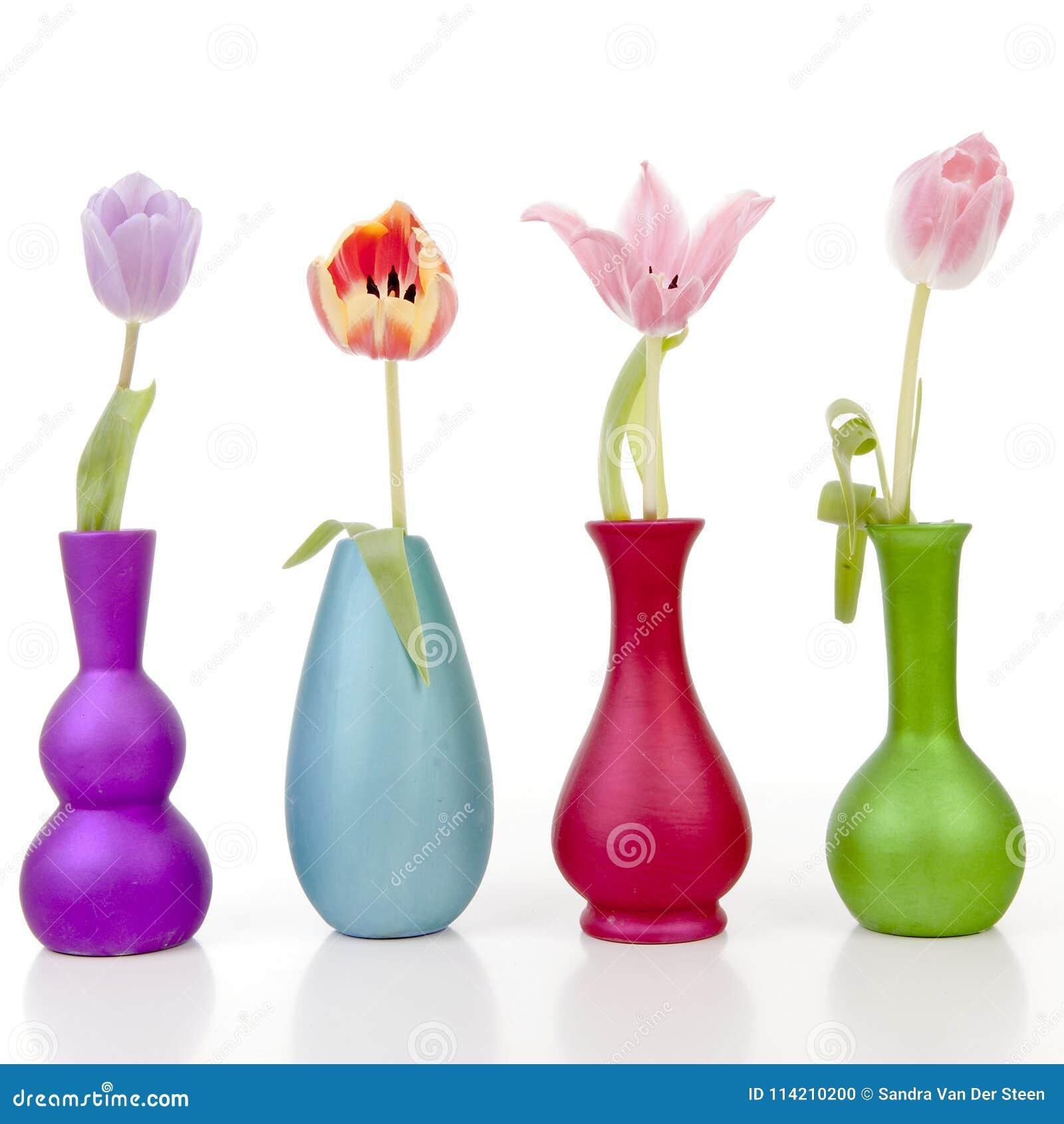 Holländska tulpan i färgrika vaser