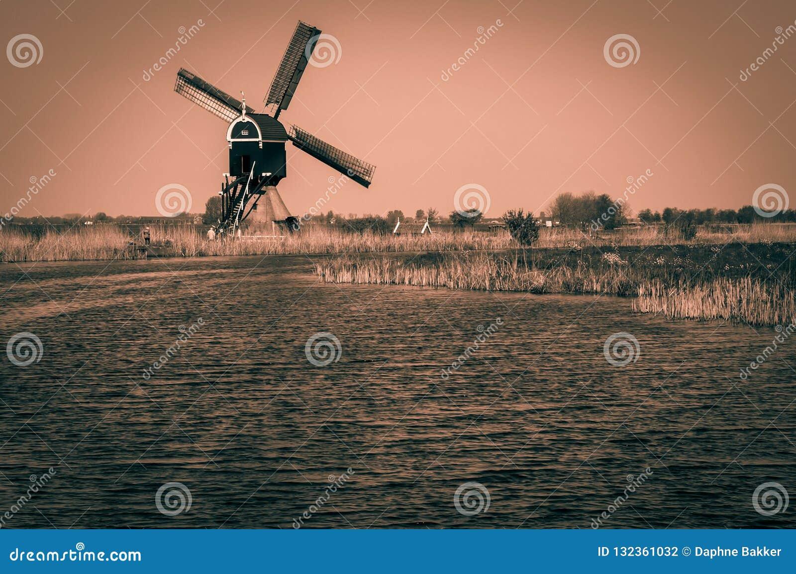 Holländskt polderlandskap med den traditionella väderkvarnen