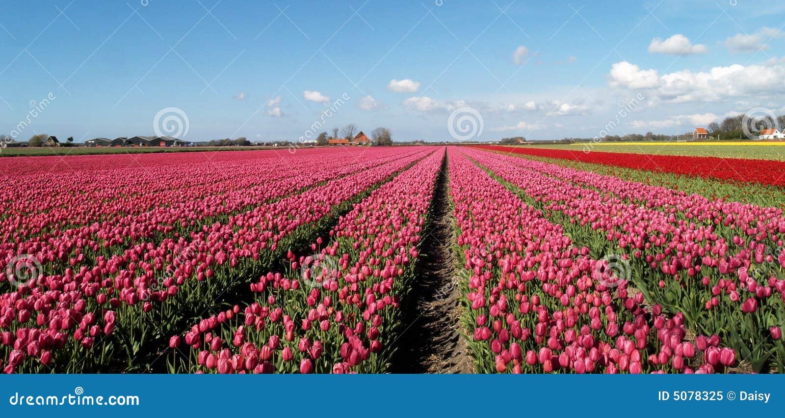 Holland-Ernte