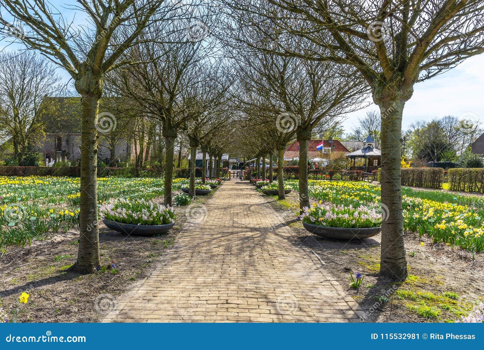 Holland maart, de lentemening van 2018 van een lange rij van nog naakte bomen, met gebieden en bloemdozen van gele en witte gele