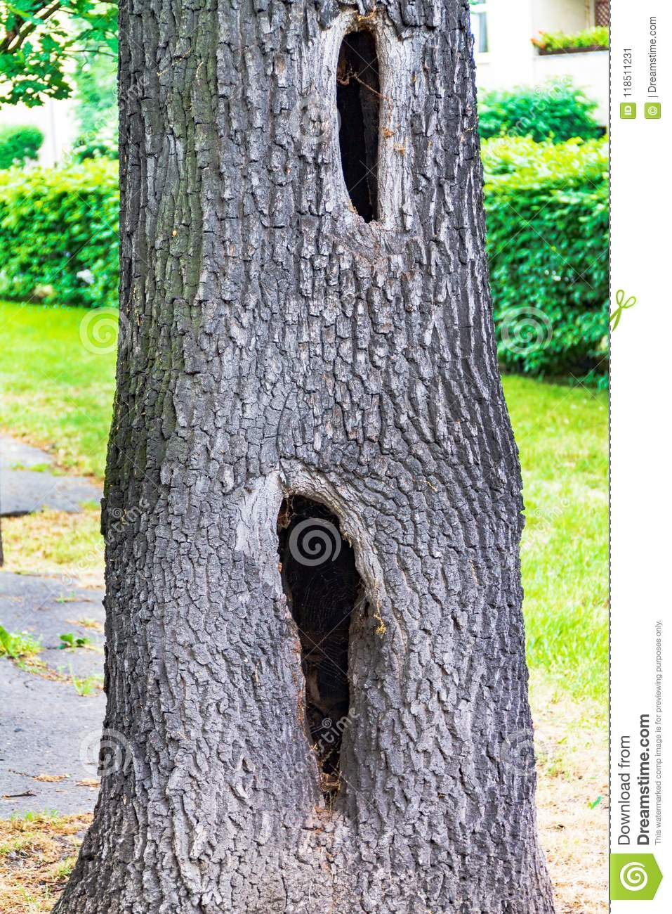 A hollow in a tree, a diseased tree, a hole in the bark