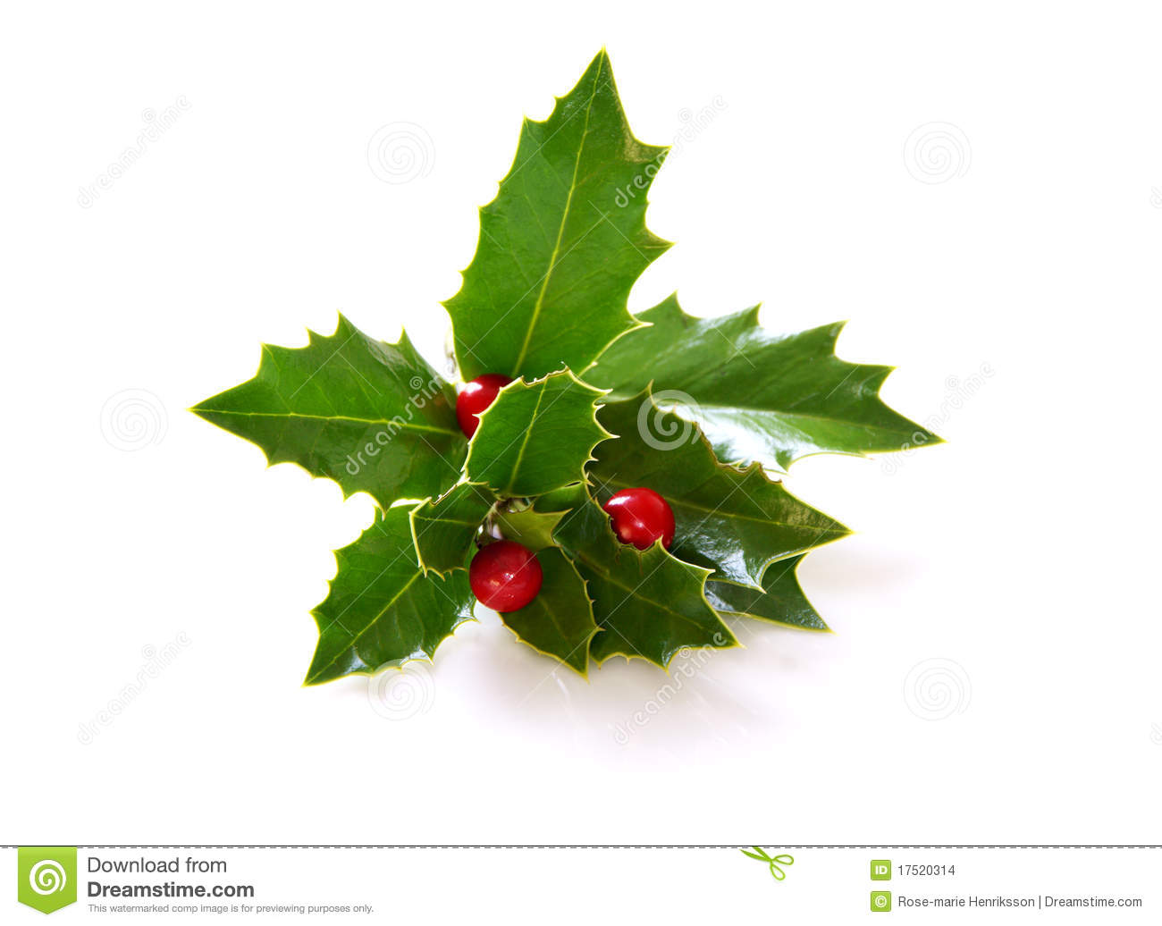 Holly Stock Photo Image Of Berries Leaves Christmas