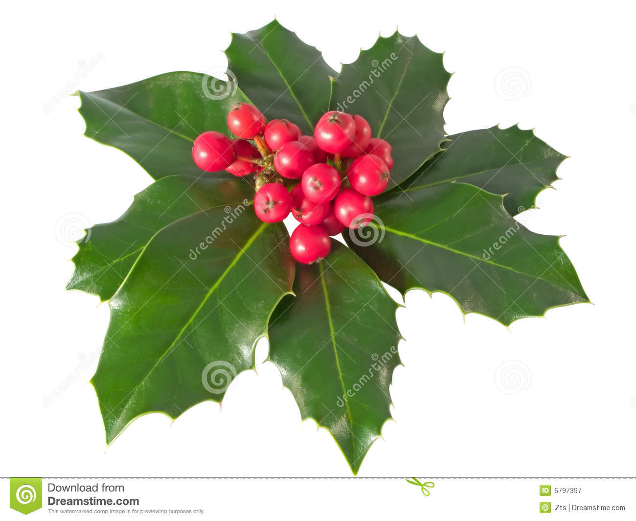 Royalty Free Stock Photography Holly Berry Image6797397