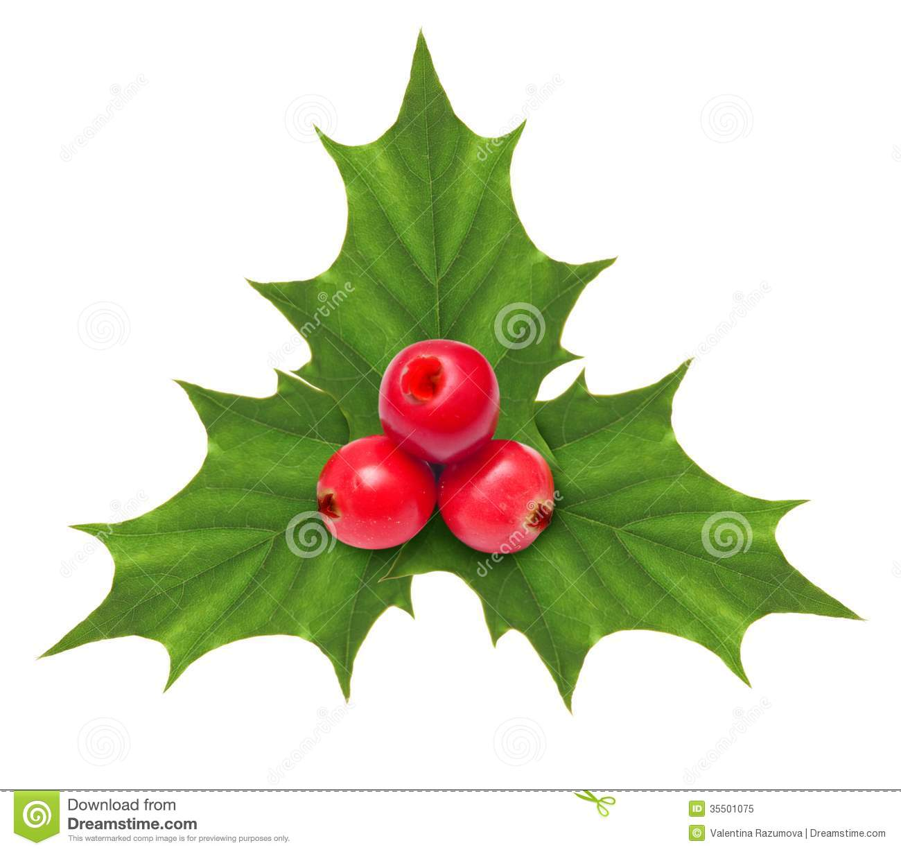 holly berry christmas decoration isolated