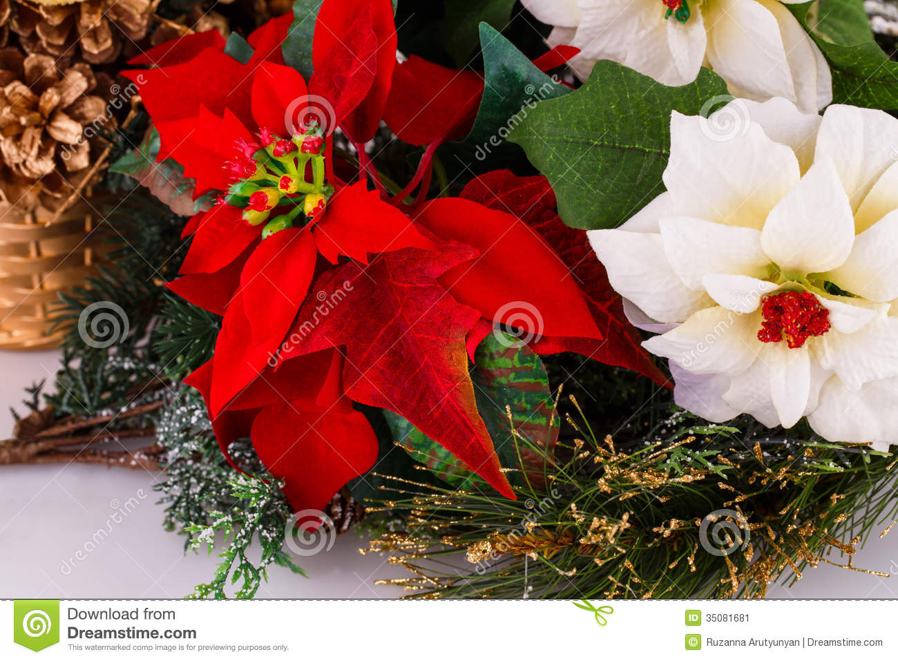 Holly Berry Flowers Stock Image Image