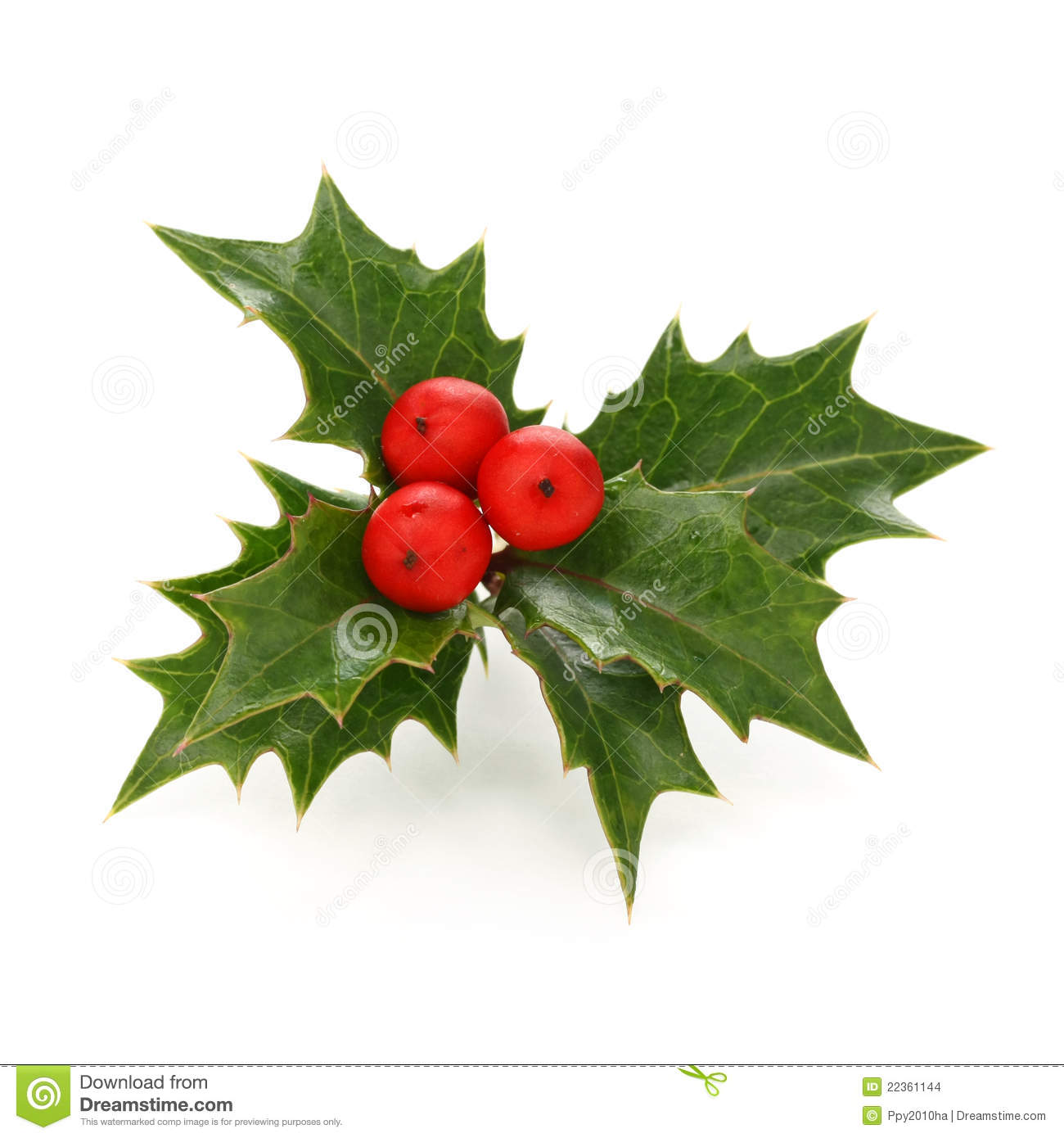 Holly Berry Sprig Christmas Symbol Stock Images Image