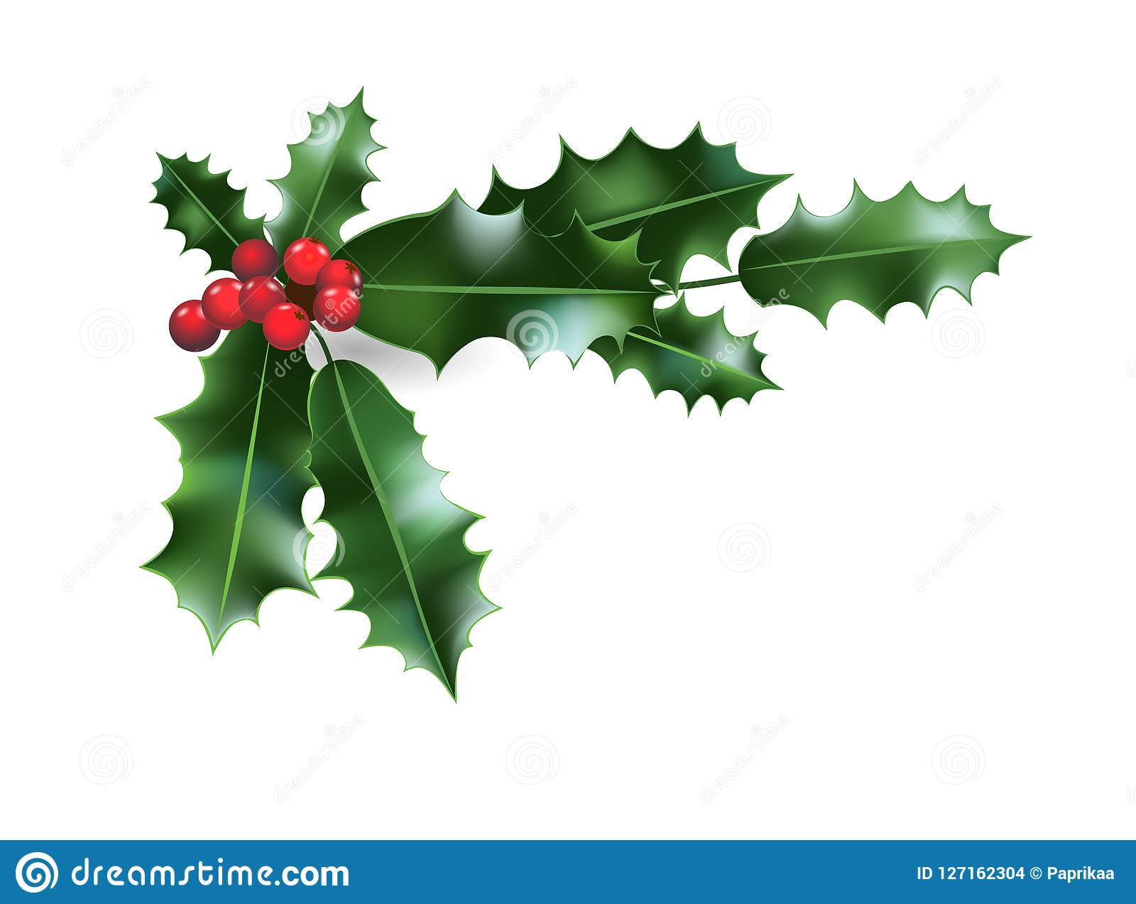 holly christmas decoration stock vector  illustration of