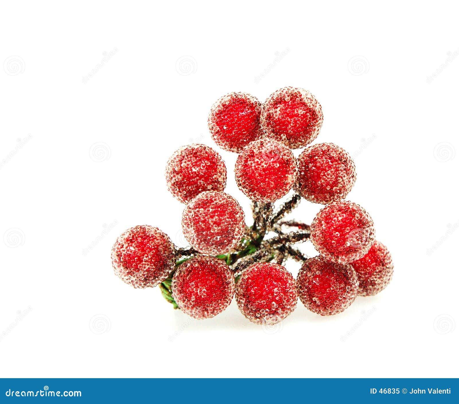 Holly czerwona jagoda