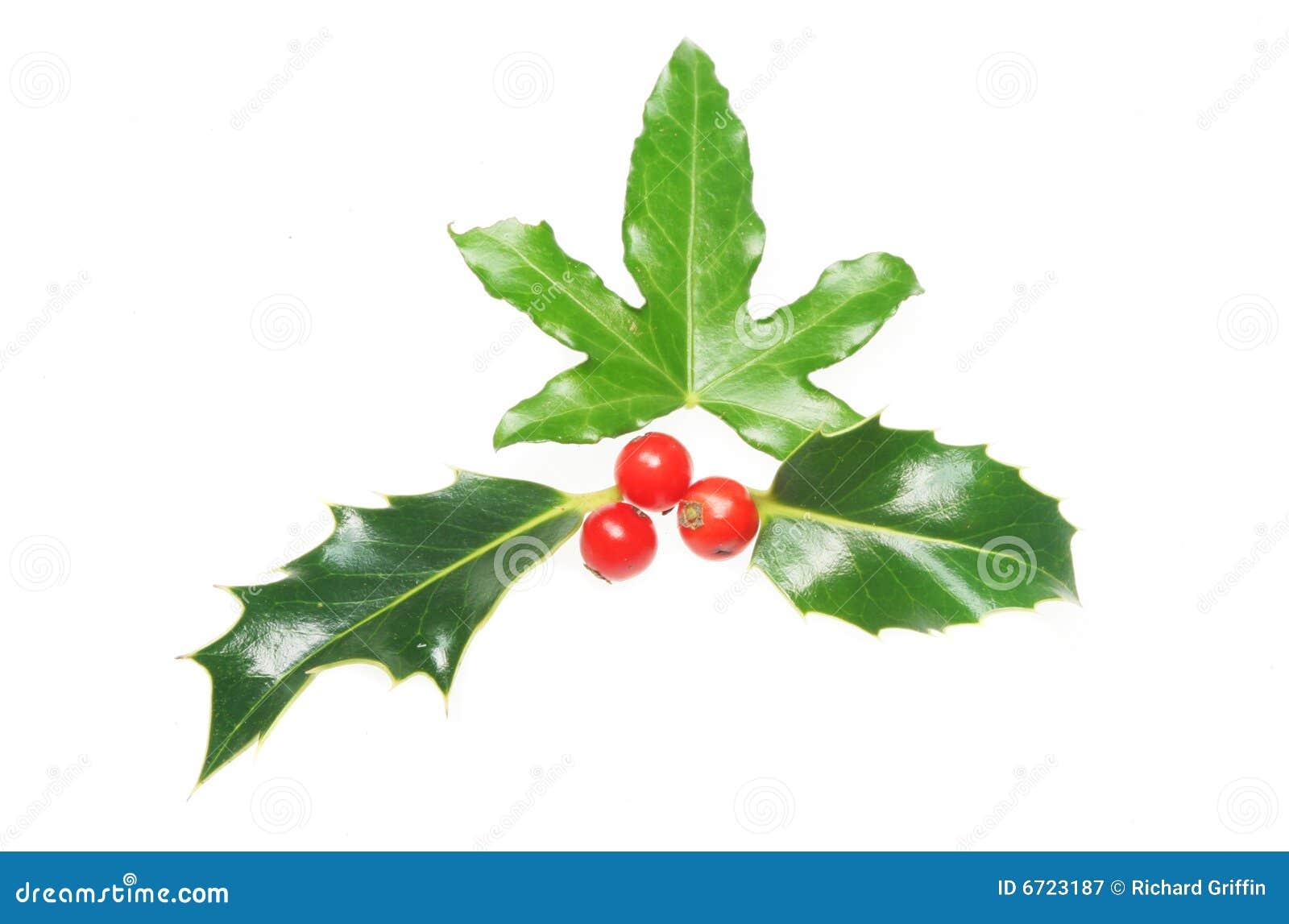 Christmas Tree Plan