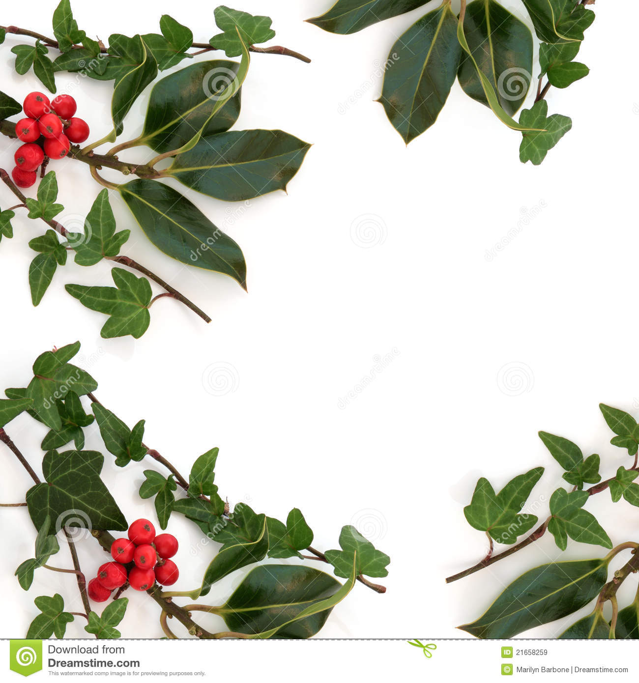 holly and ivy border stock image image of xmas winter 21658259