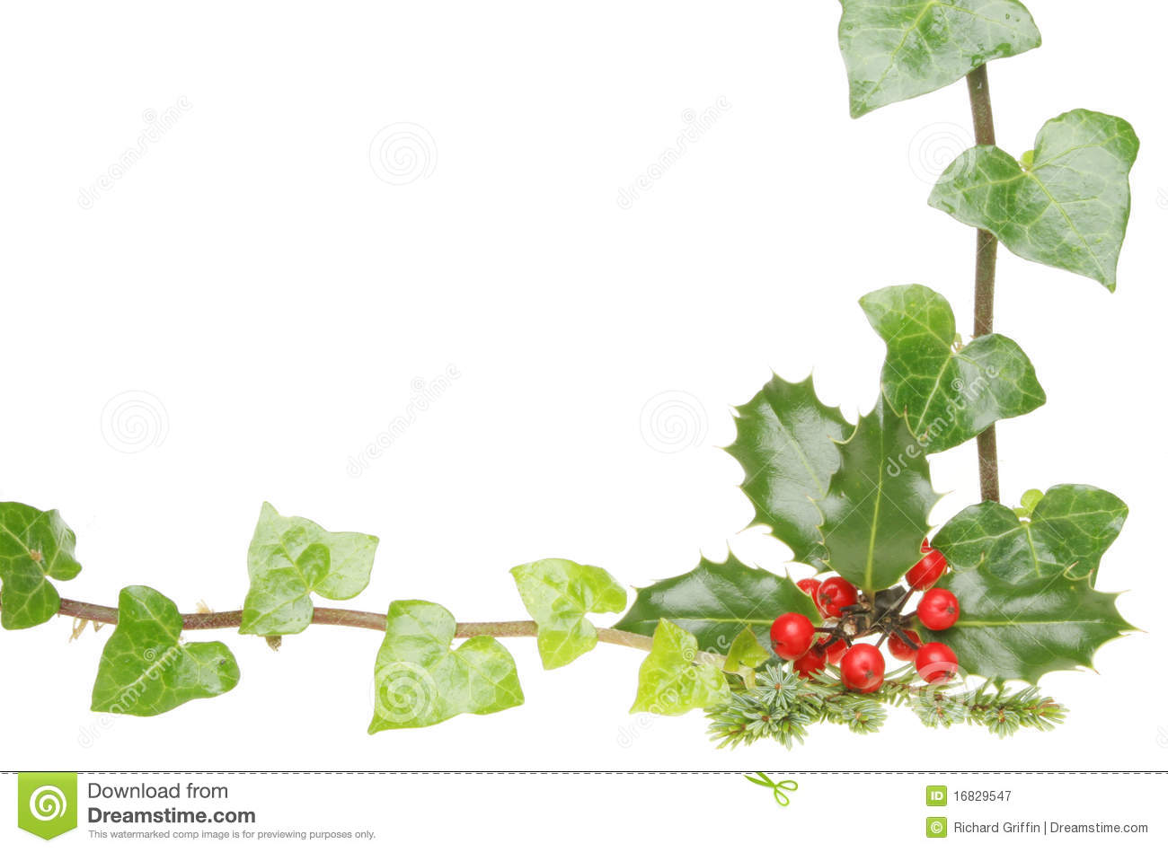 Holly and ivy frame royalty free stock photography image 16829547 for Holly and ivy border
