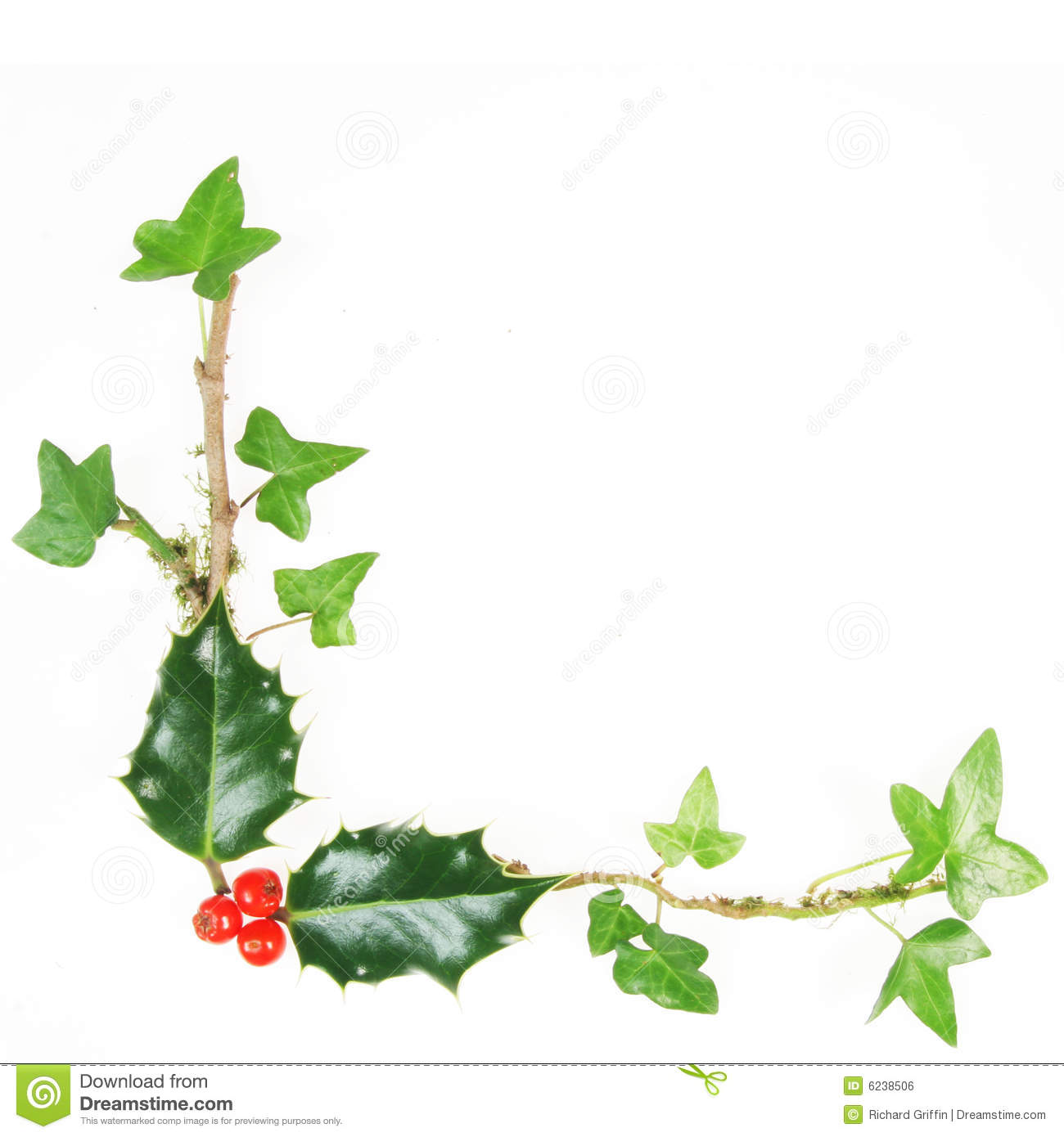 Holly And Ivy Frame Royalty Free Stock Image - Image: 6238506