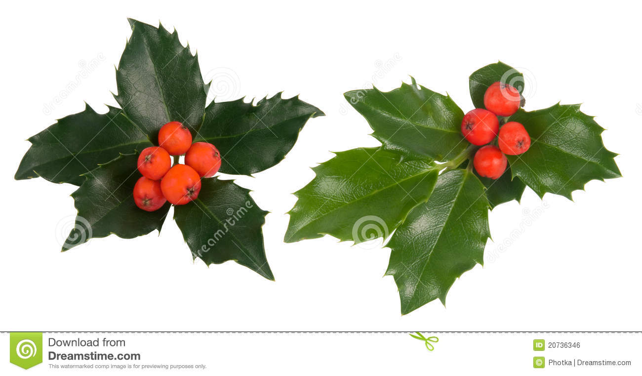 Holly leaves royalty free stock image image 20736346 for Holl image