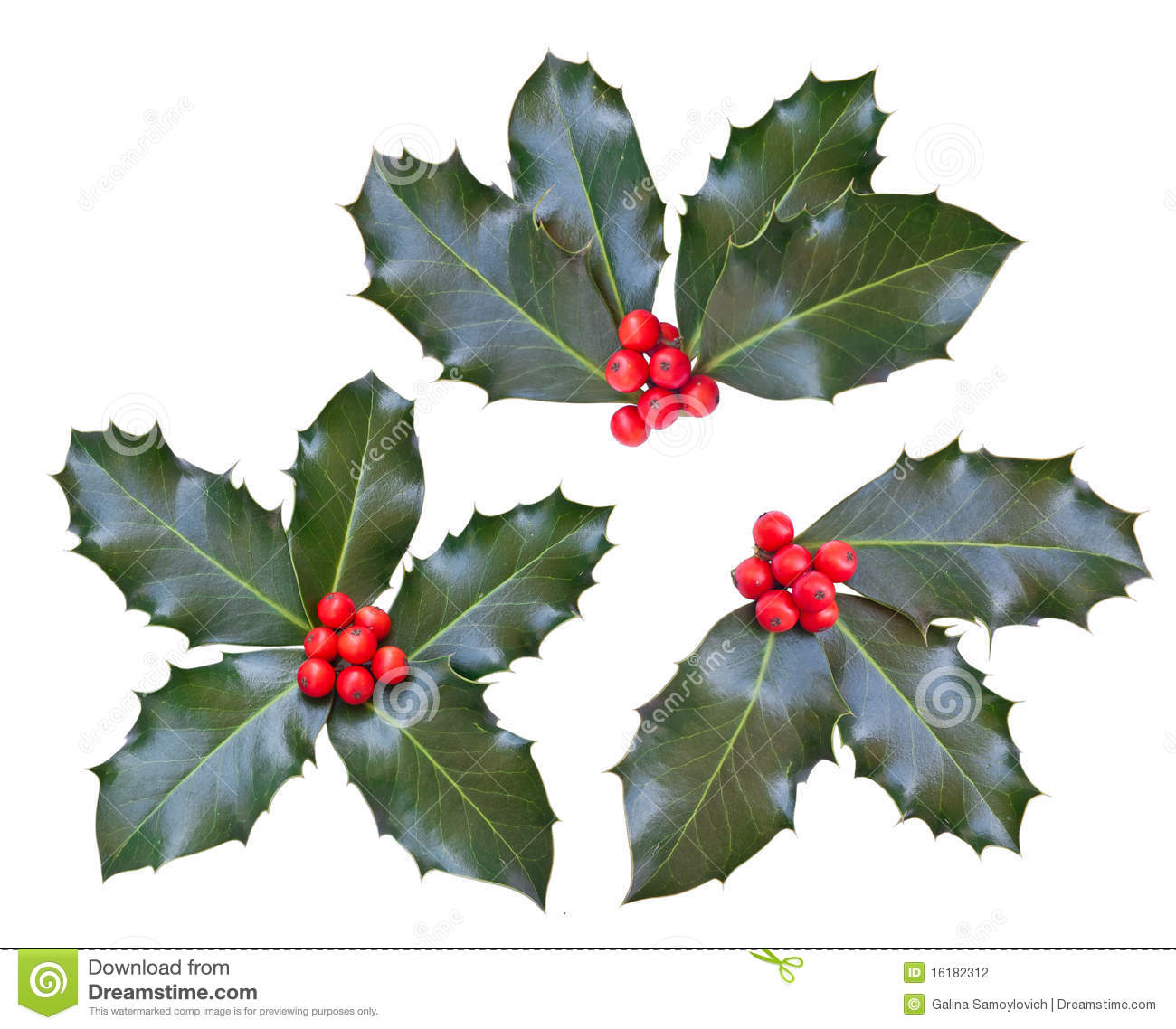 Holly leaves and berries stock photography image 16182312