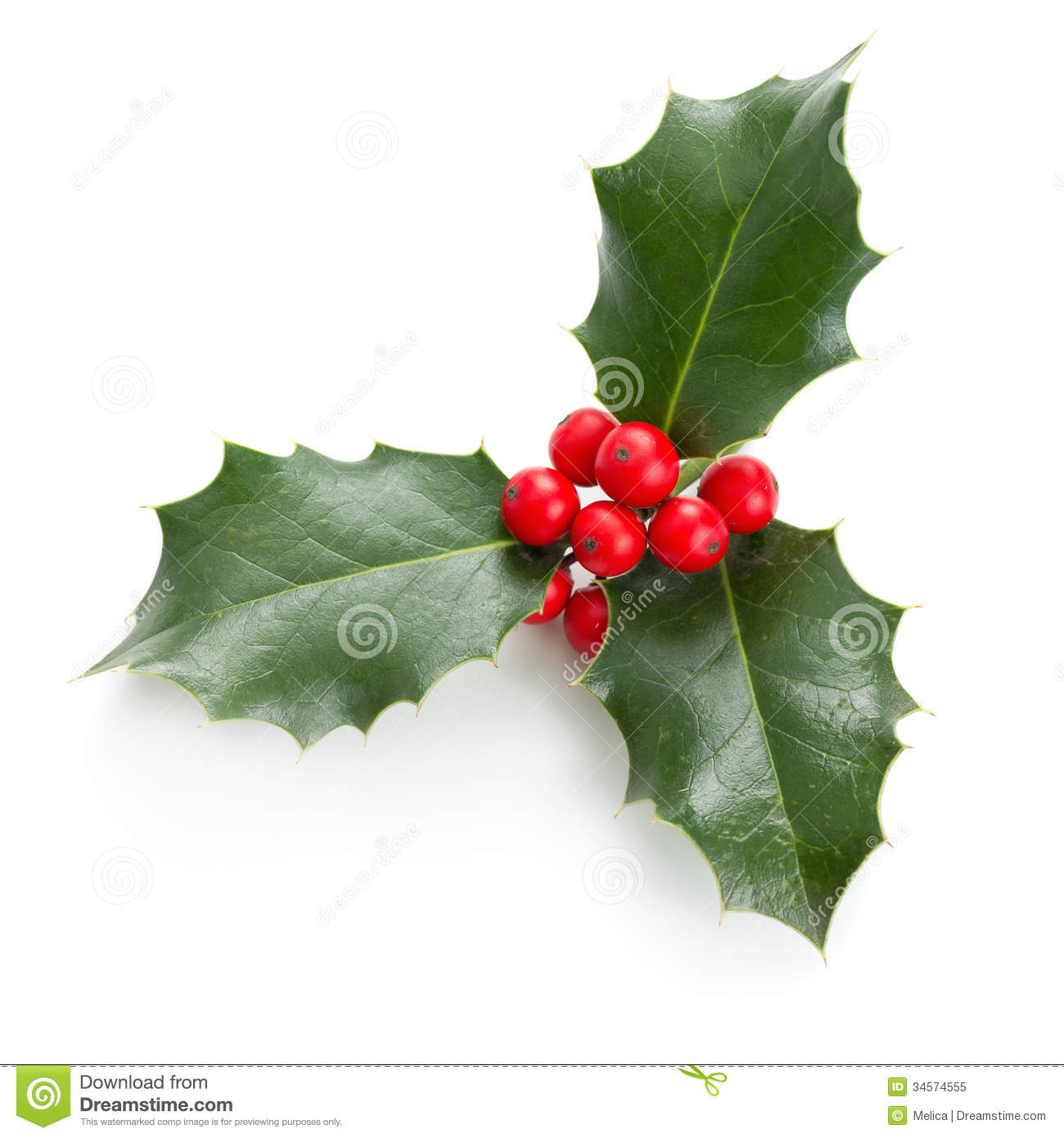 Holly Leaves And Berries Royalty Free Stock Photo - Image: 34574555