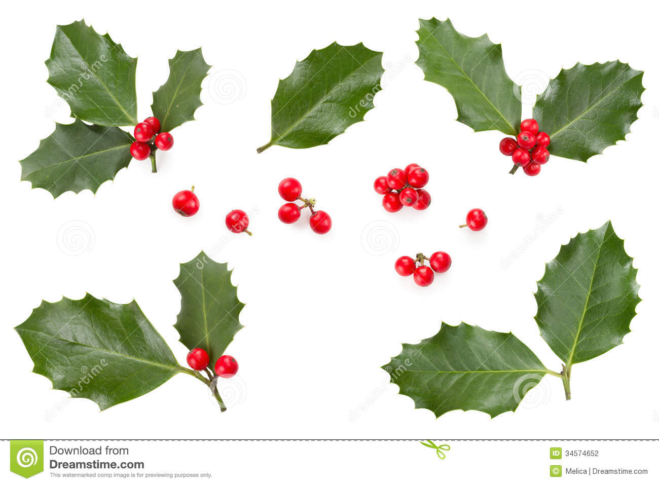 Holly Leaves And Berries Stock Photography - Image: 34574652