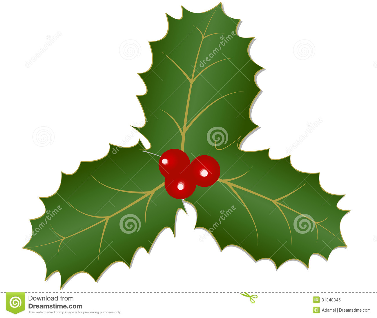Holly leaves and berries royalty free stock photo image for Holl image
