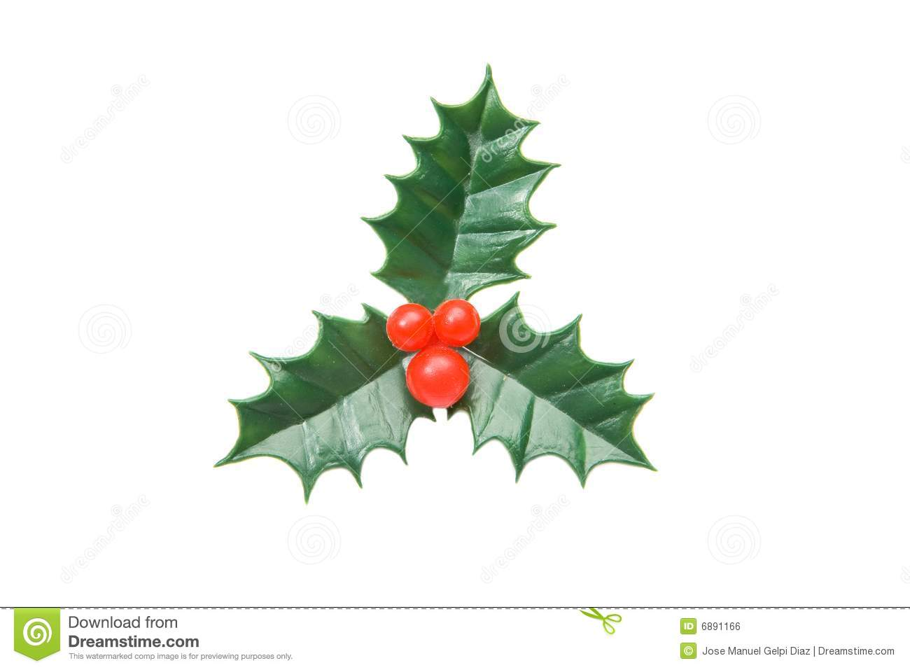 The holly typical ornament of christmas