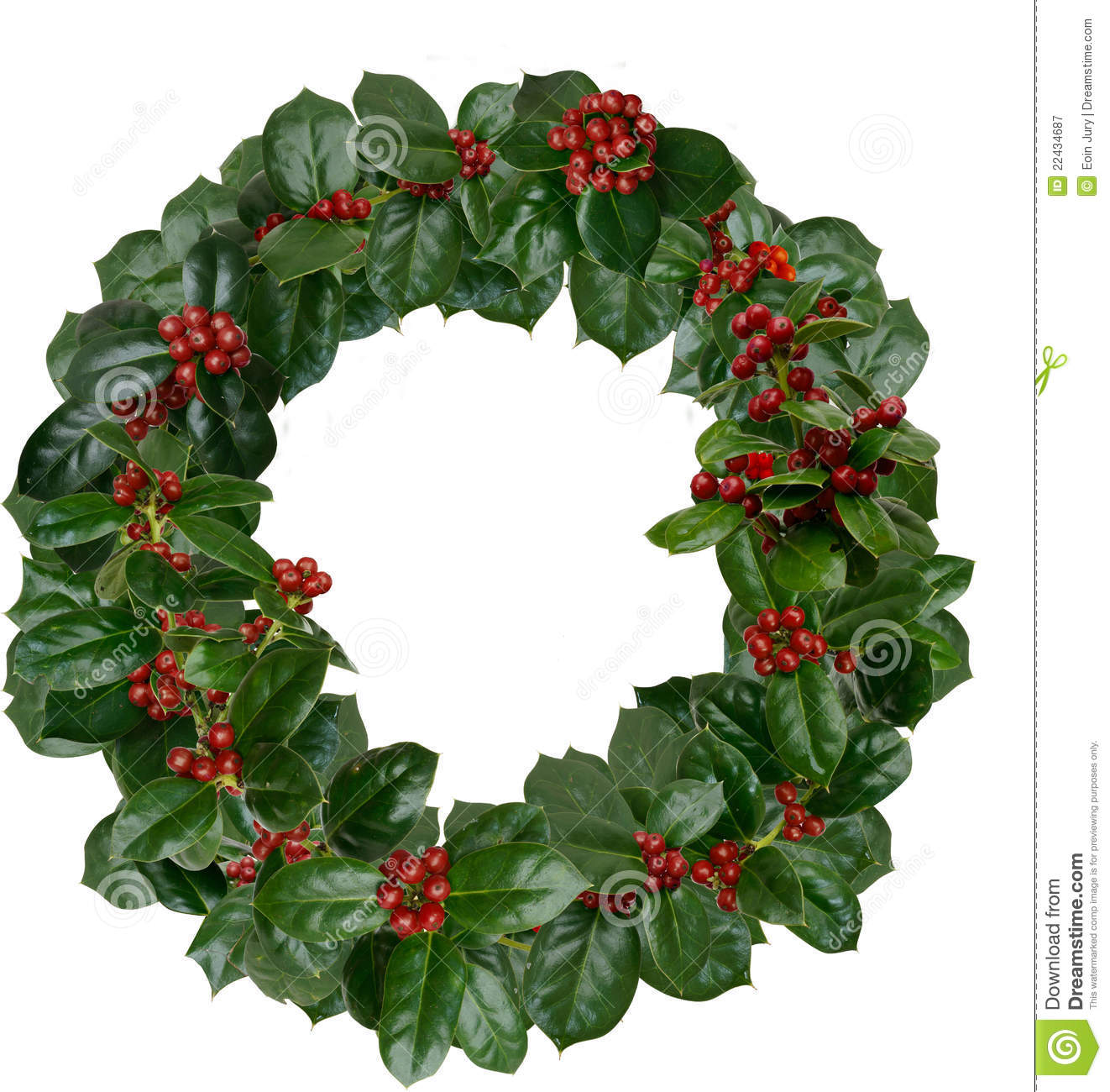 Holly wreath stock image of holiday
